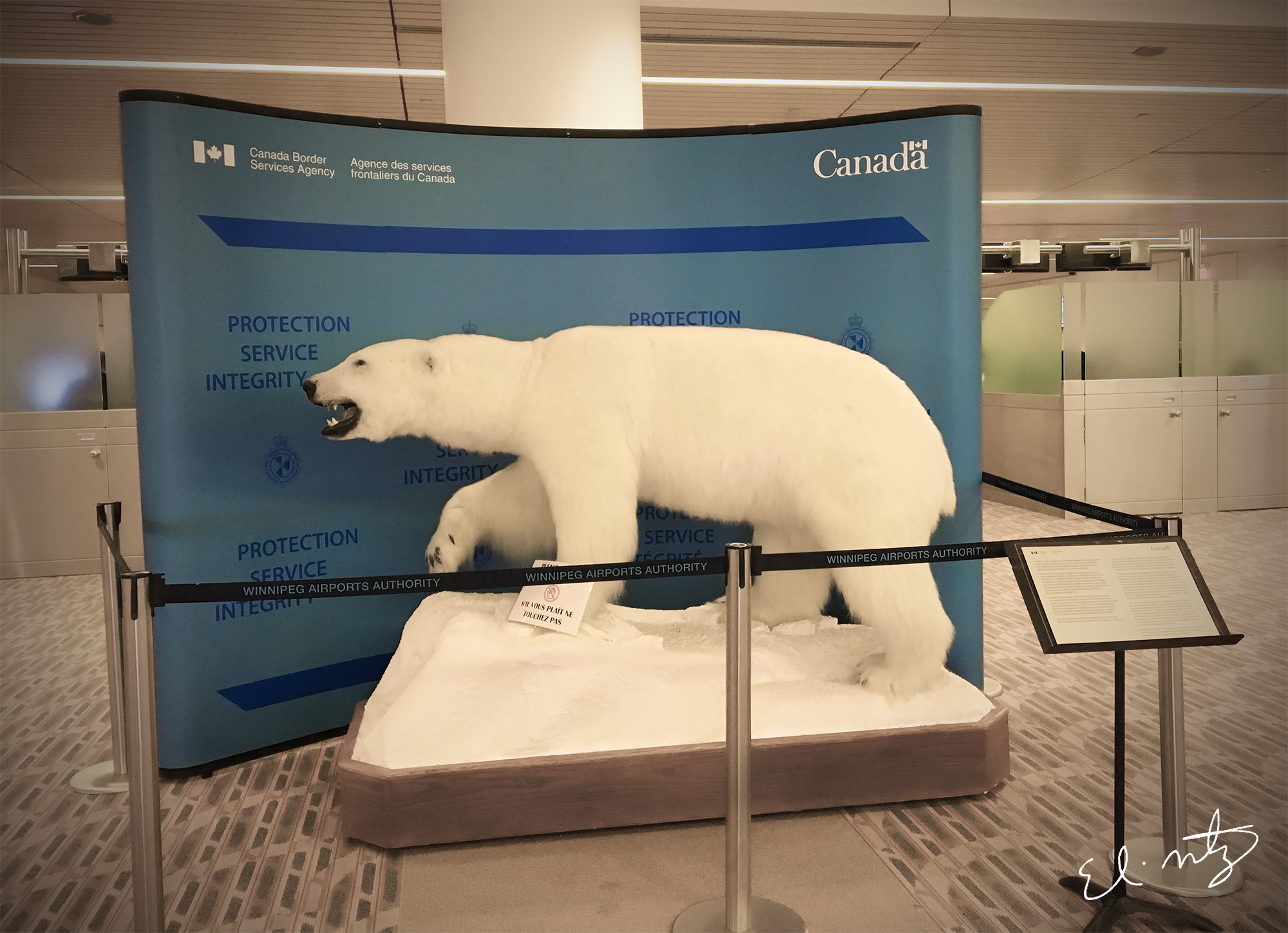 Polar Bear at the Winnipeg airport.