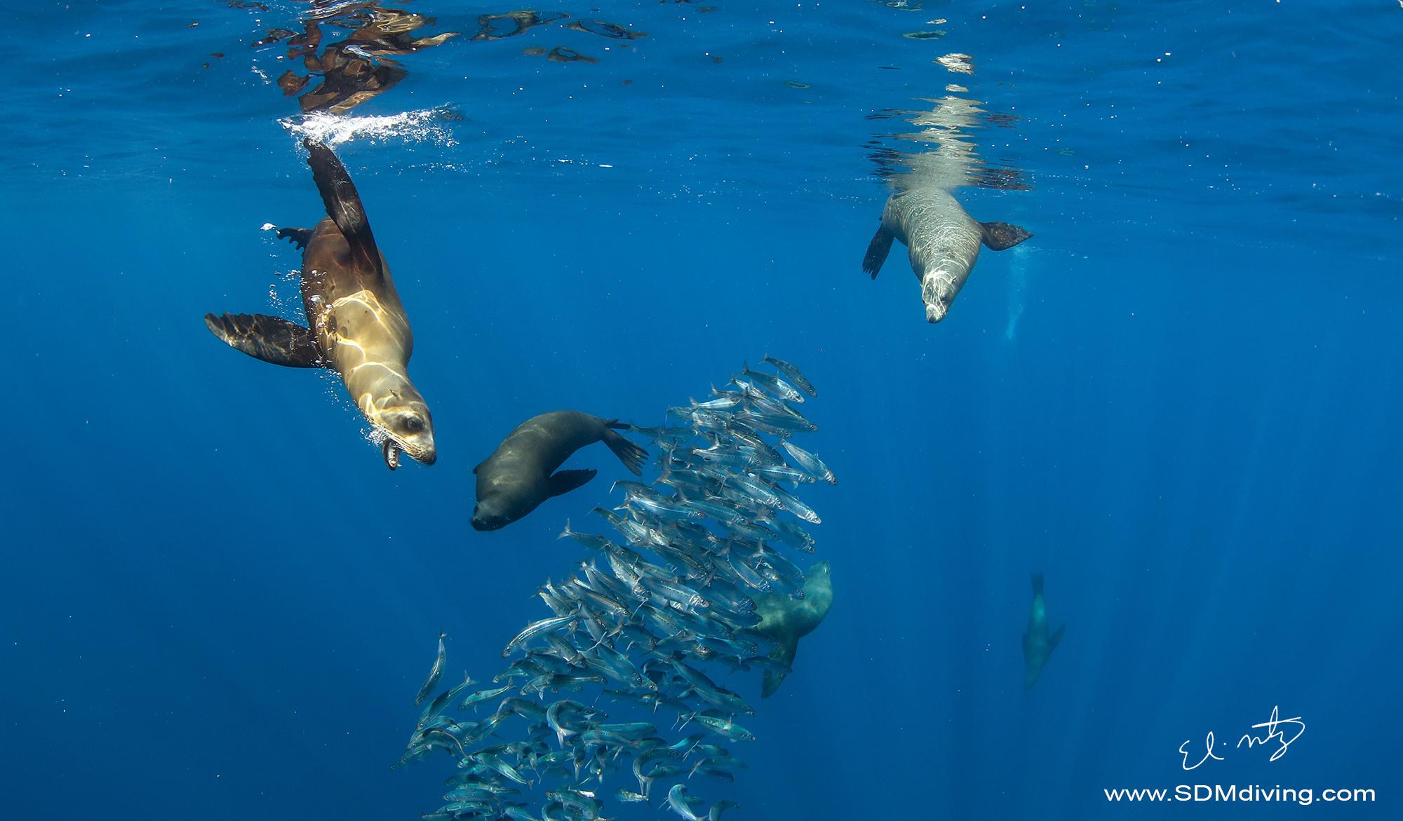 sea lion 3.jpg