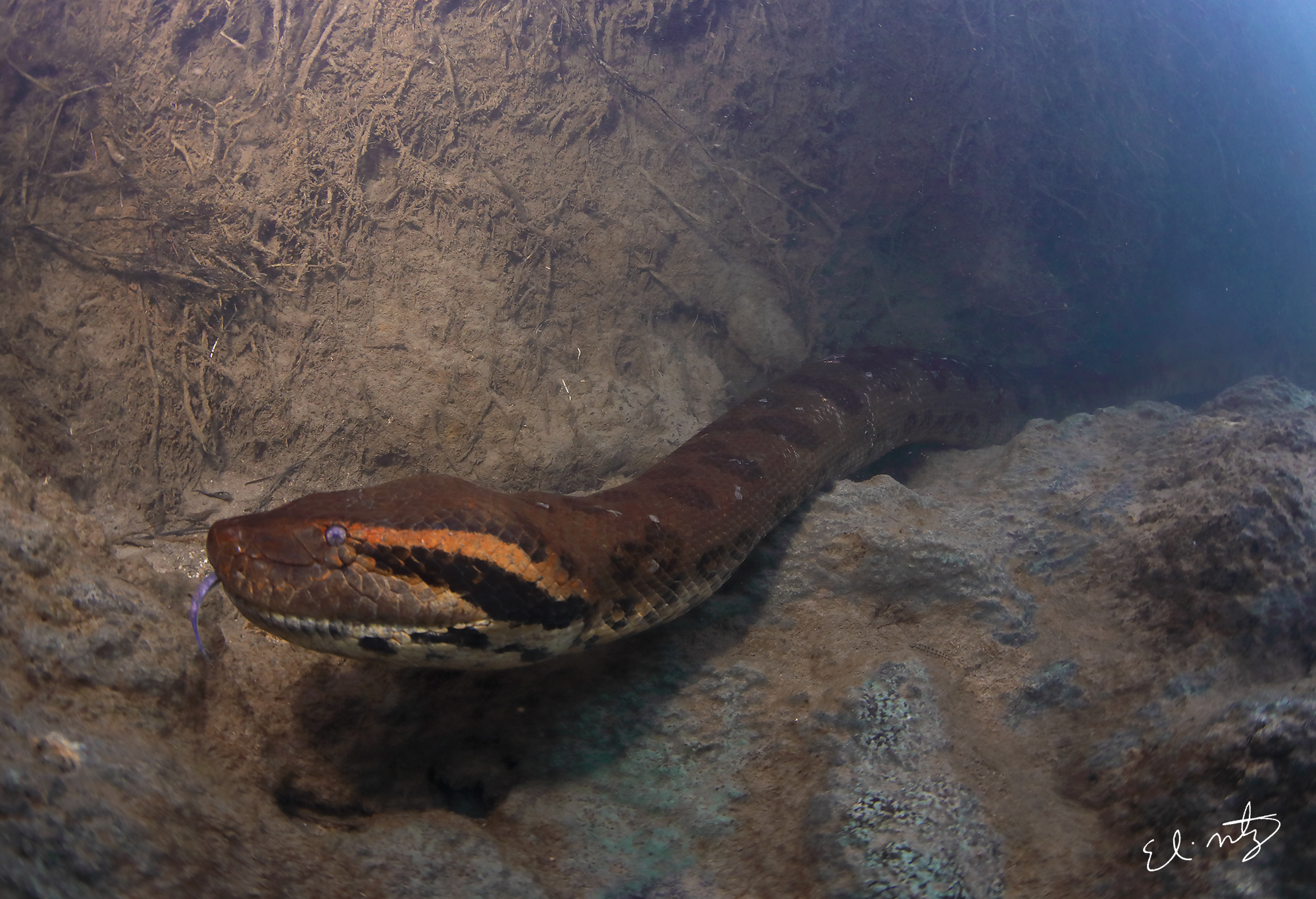 anaconda 10.jpg