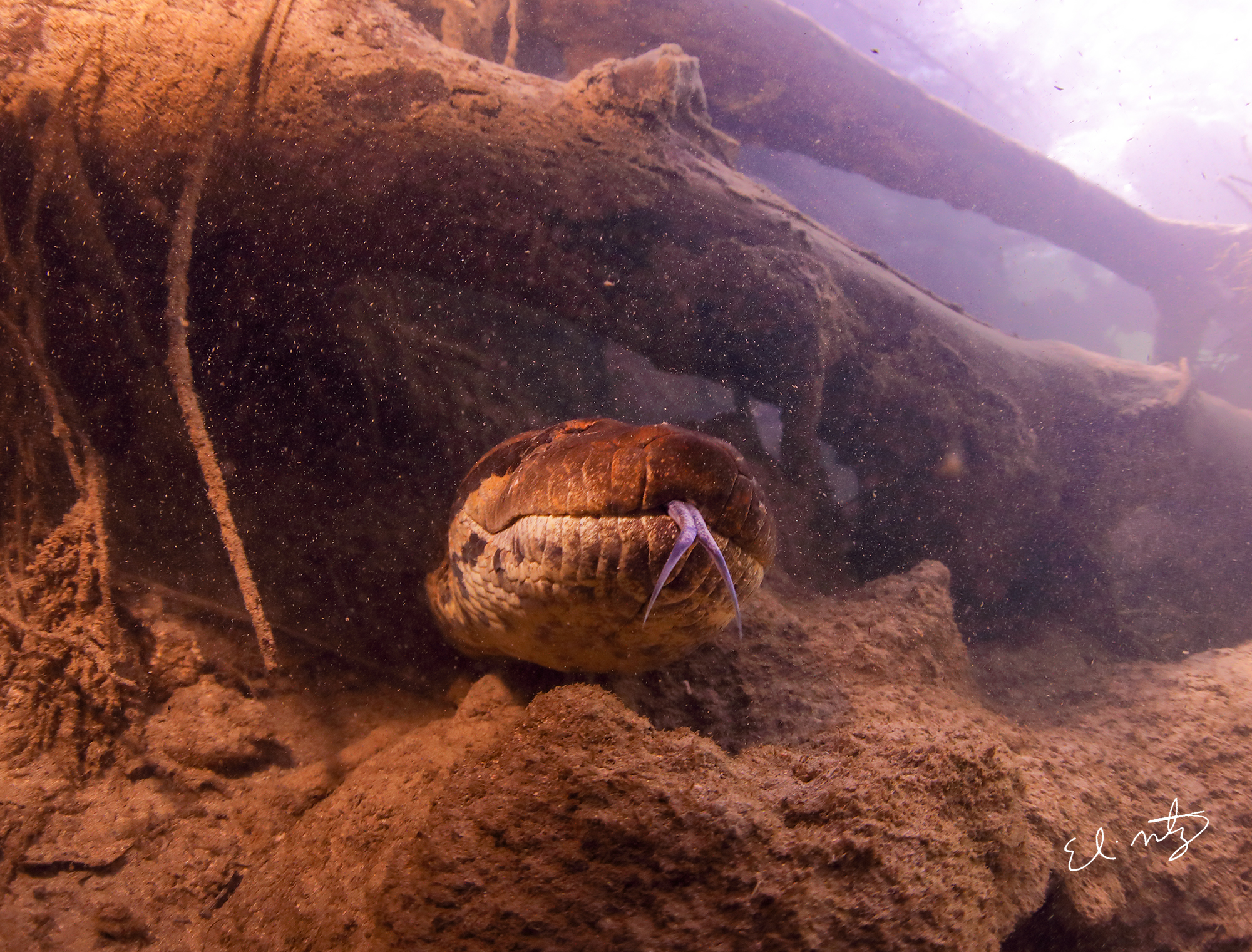 anaconda 16.jpg