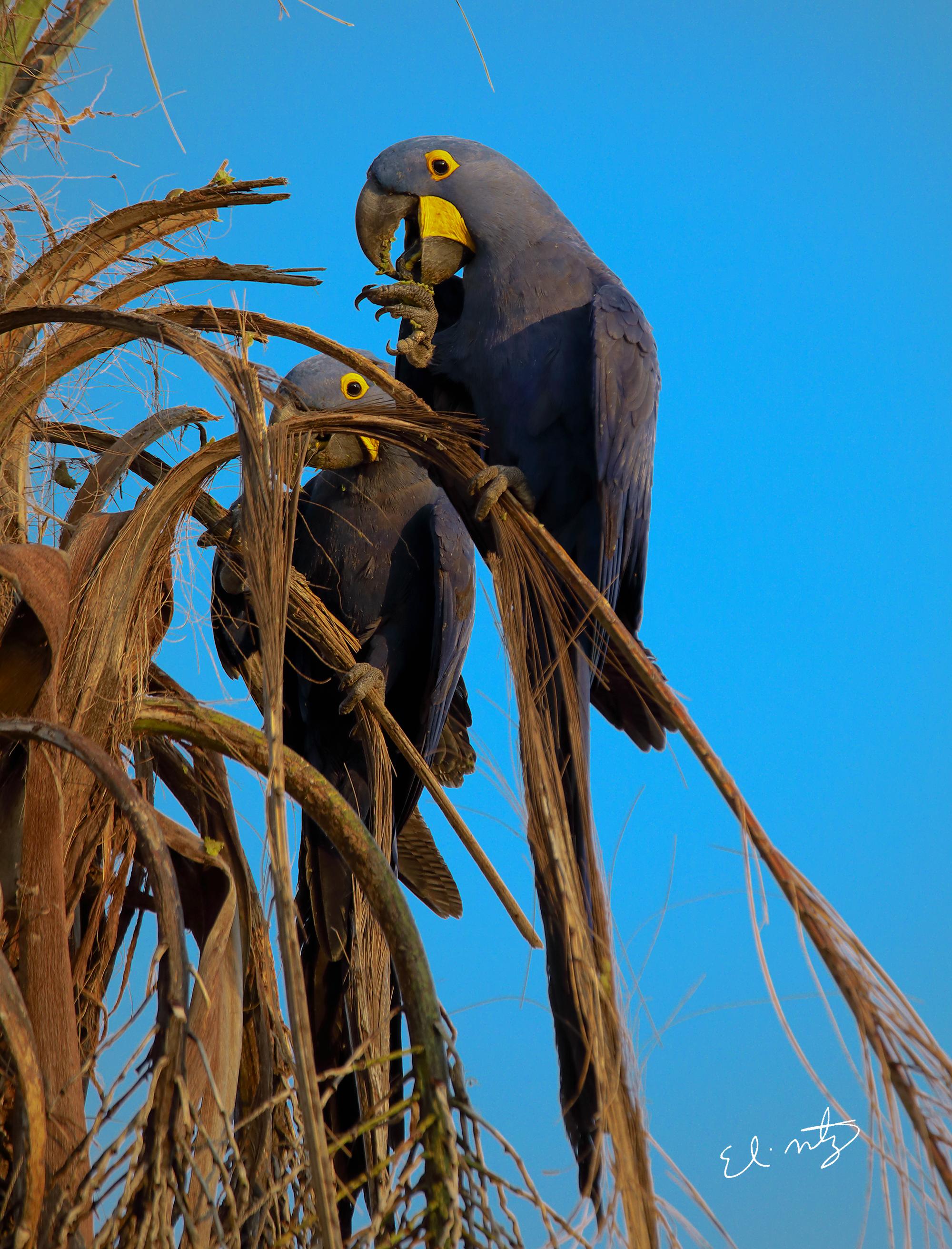parrots 3.jpg