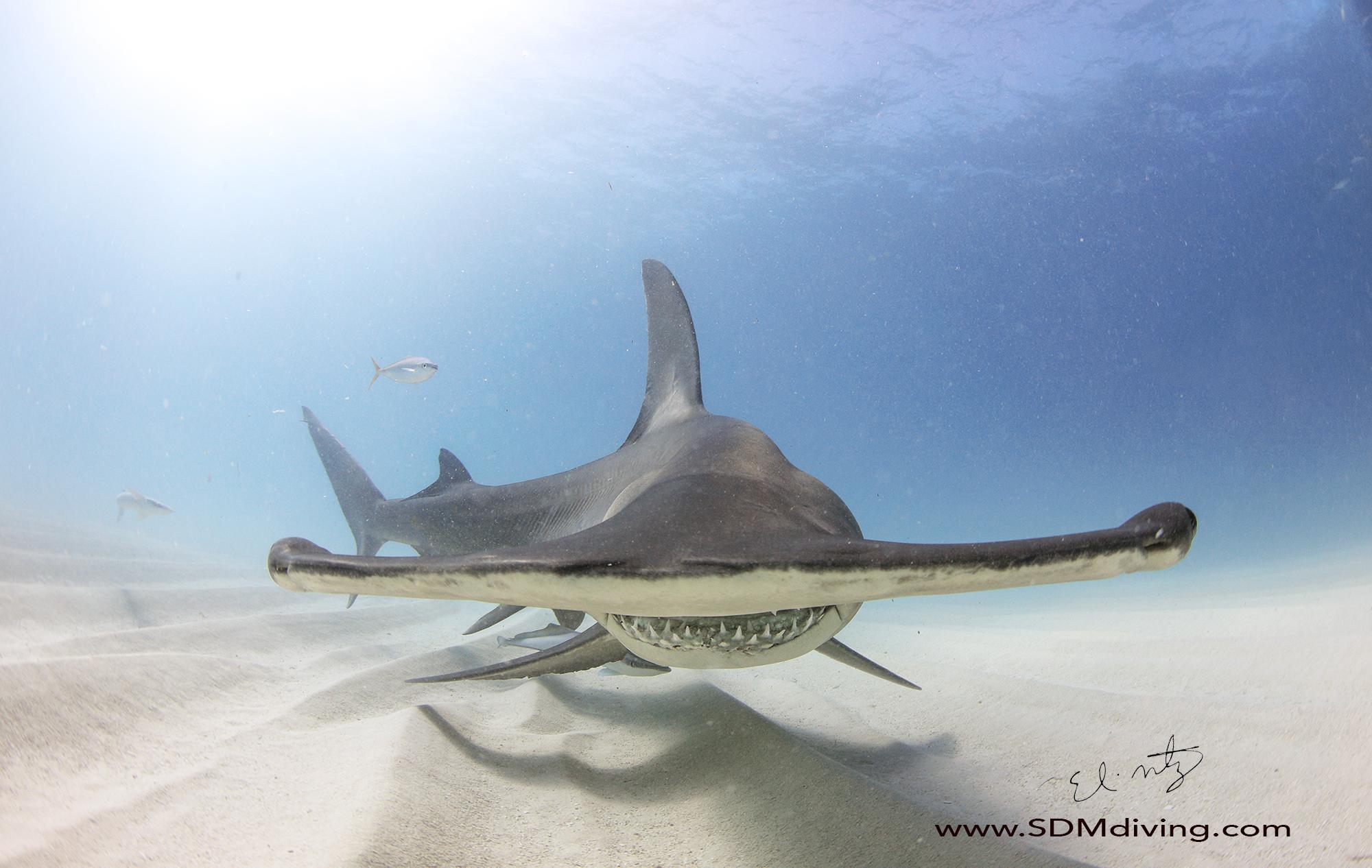 alien shark.jpg