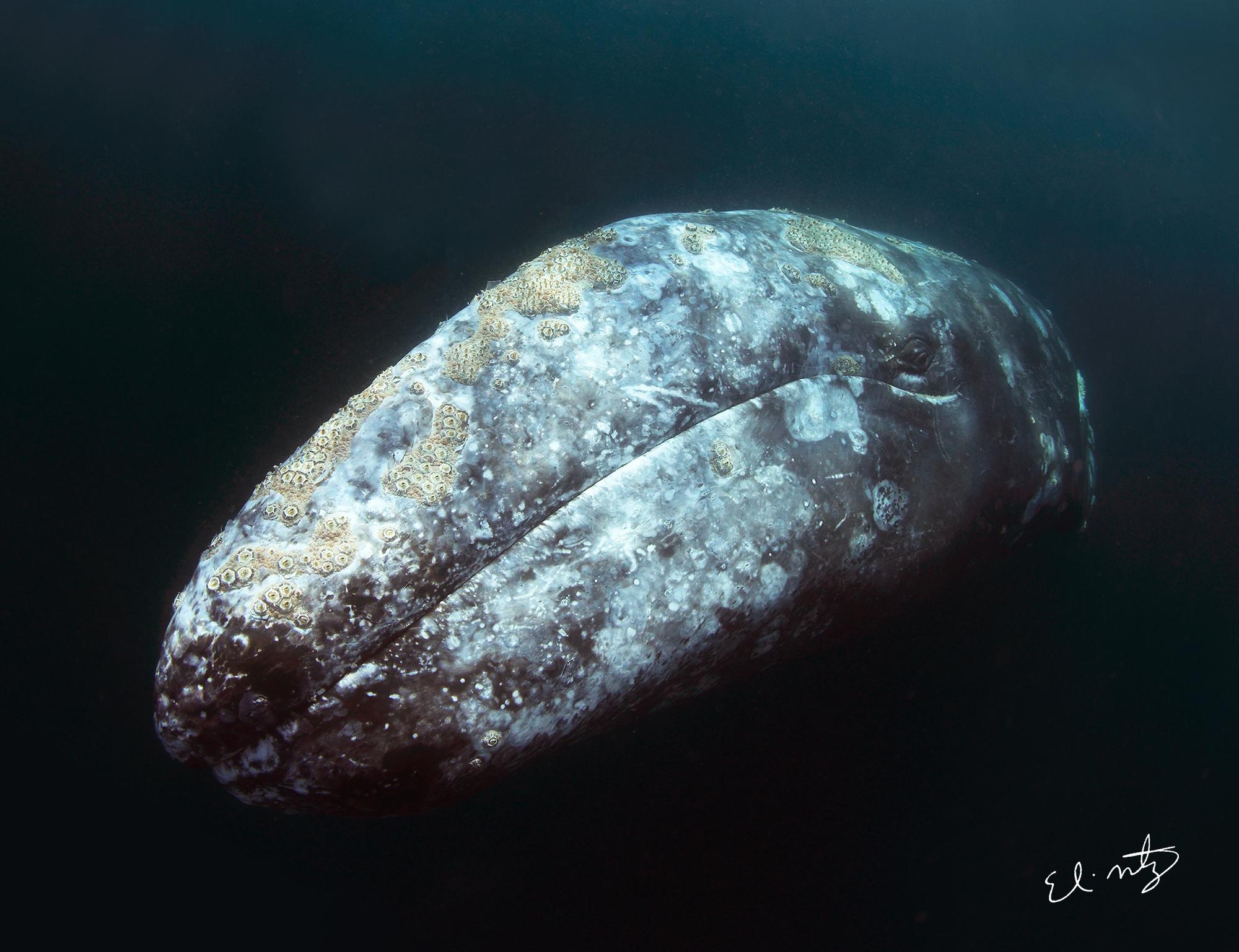 whale+4.jpg