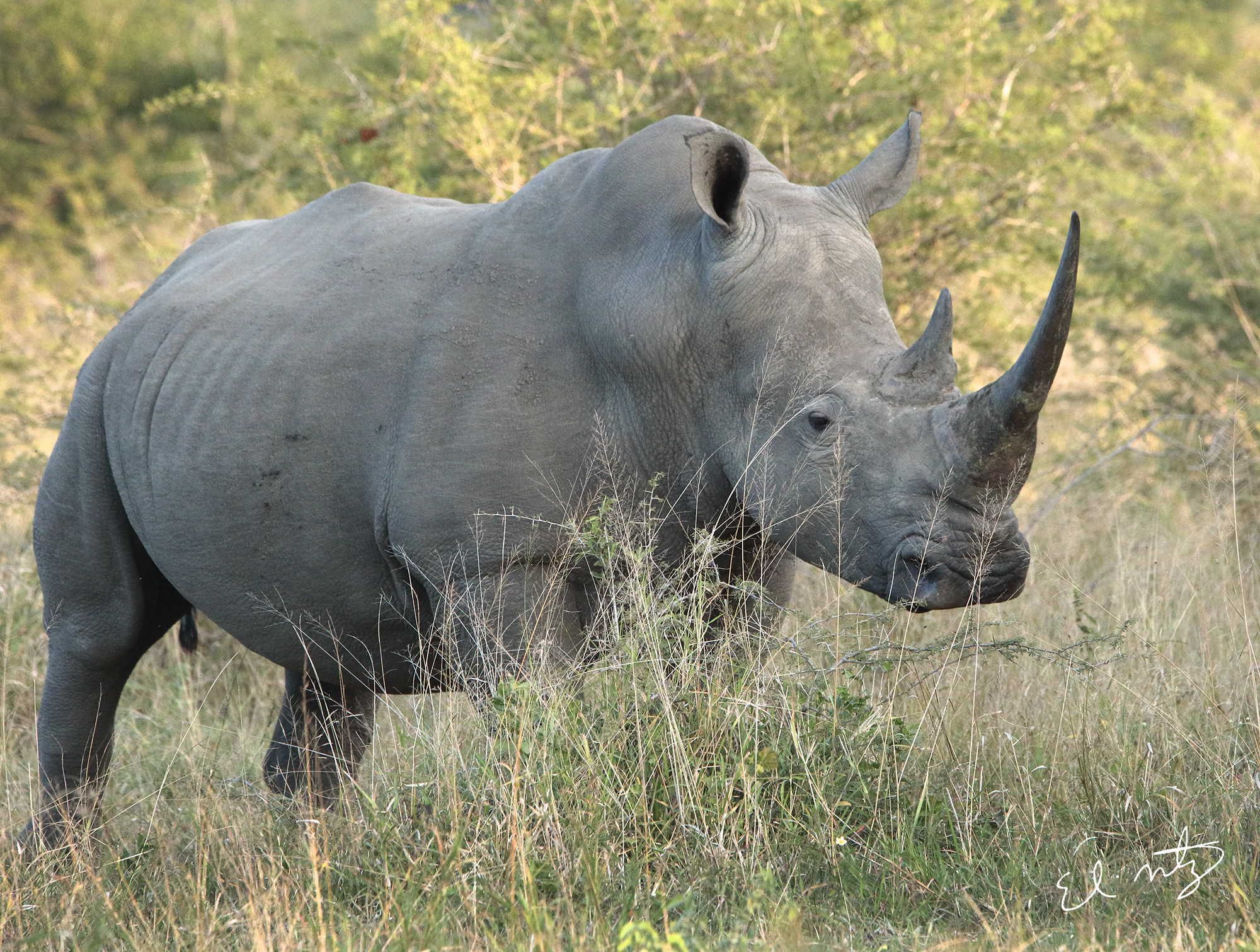 rhino 3.jpg