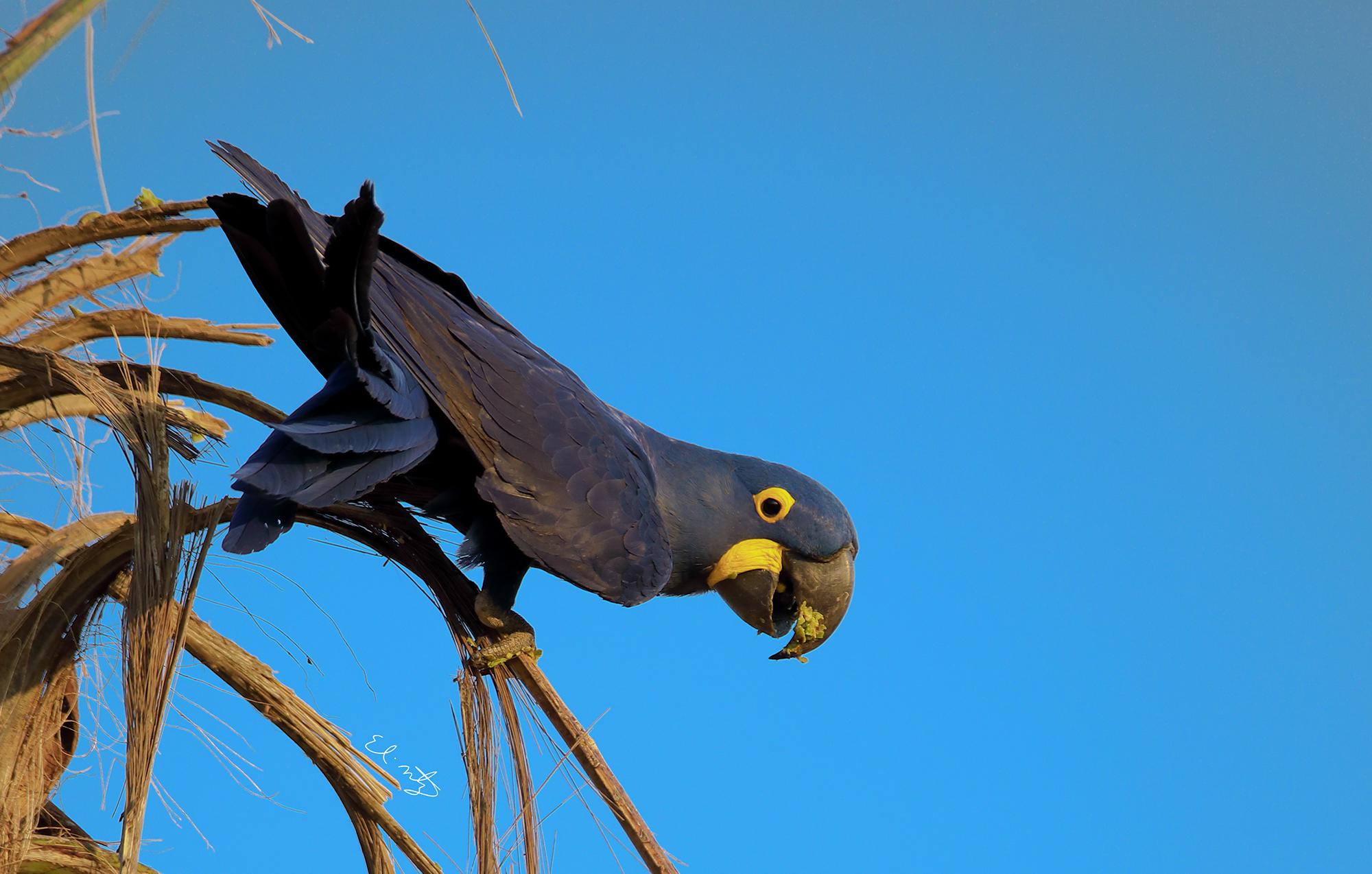 parrot 5.jpg