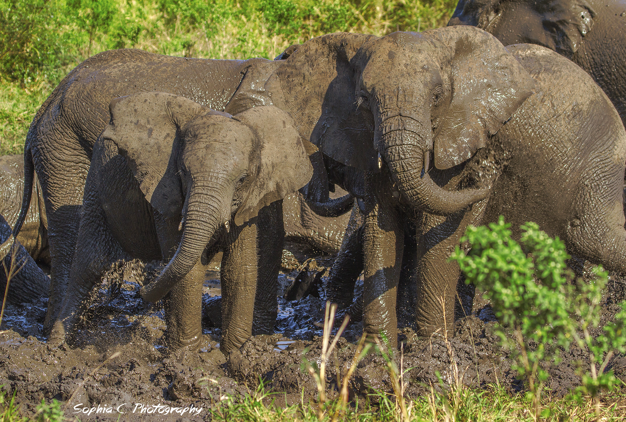 young elephants.jpg