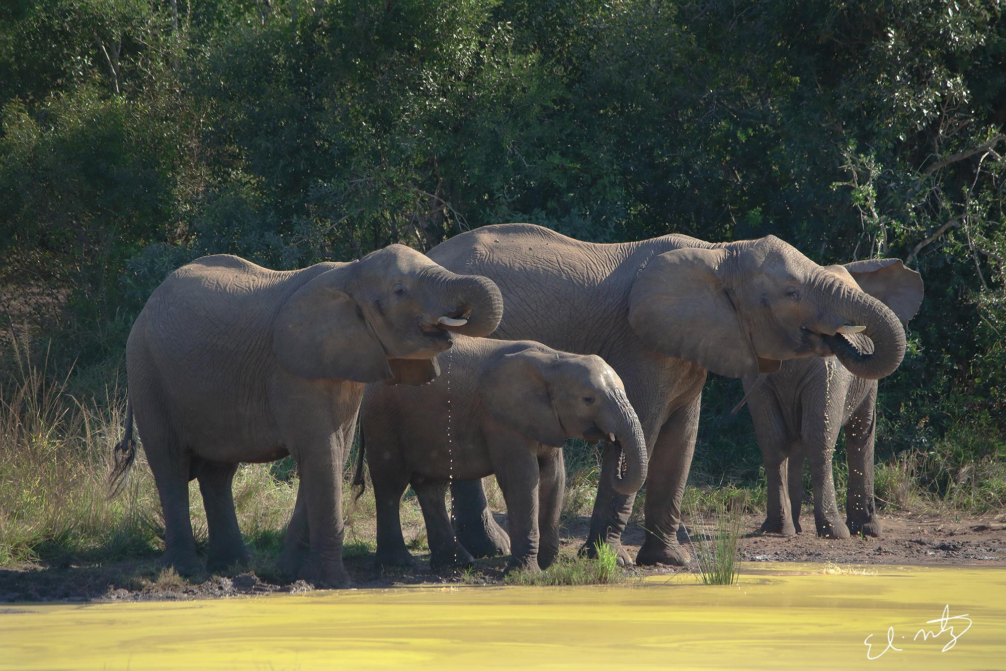 elephant 6.jpg