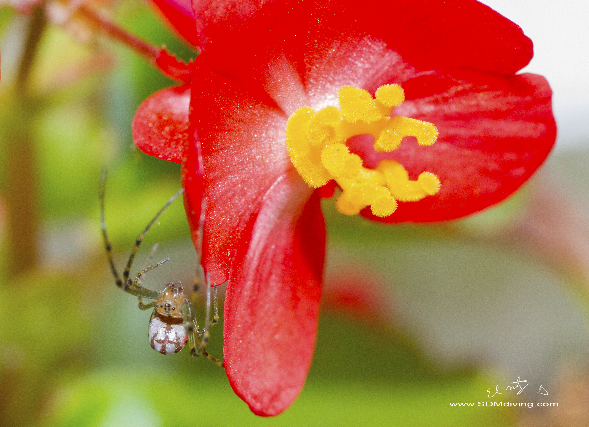 1. Orchard Spider