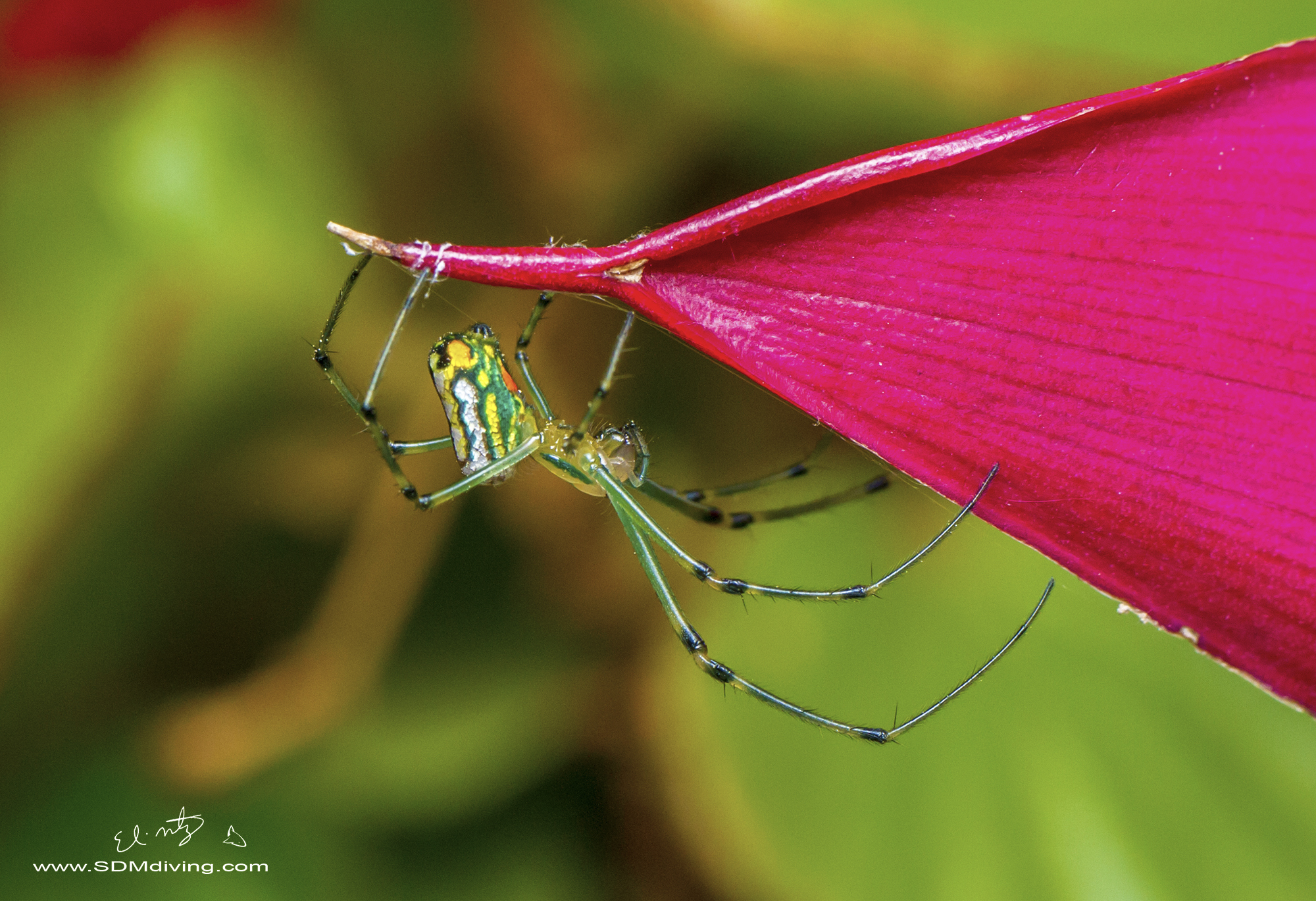 7. Orchard spider