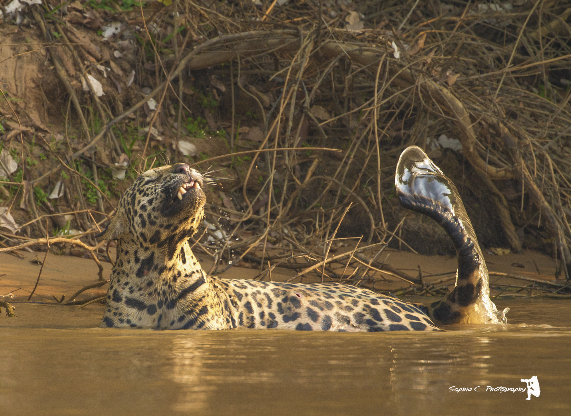 Wildlife Photography Expeditions