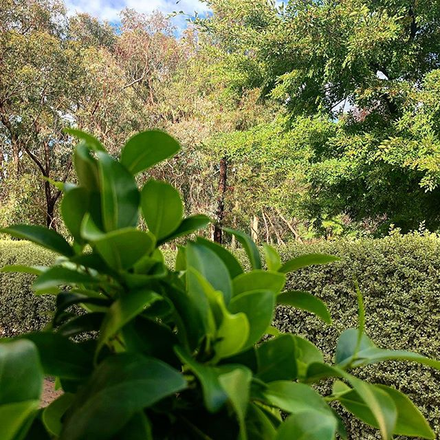 The weekend! . . #dormlife #accommodation #mylor #adelaidehills #longwoodretreat #stay #garden #saturday #weekend #weekendvibes #saturdaymorning #sun #autumn #seasons #beautiful #nature #getaway #explore #adventure #trees #green #freshair