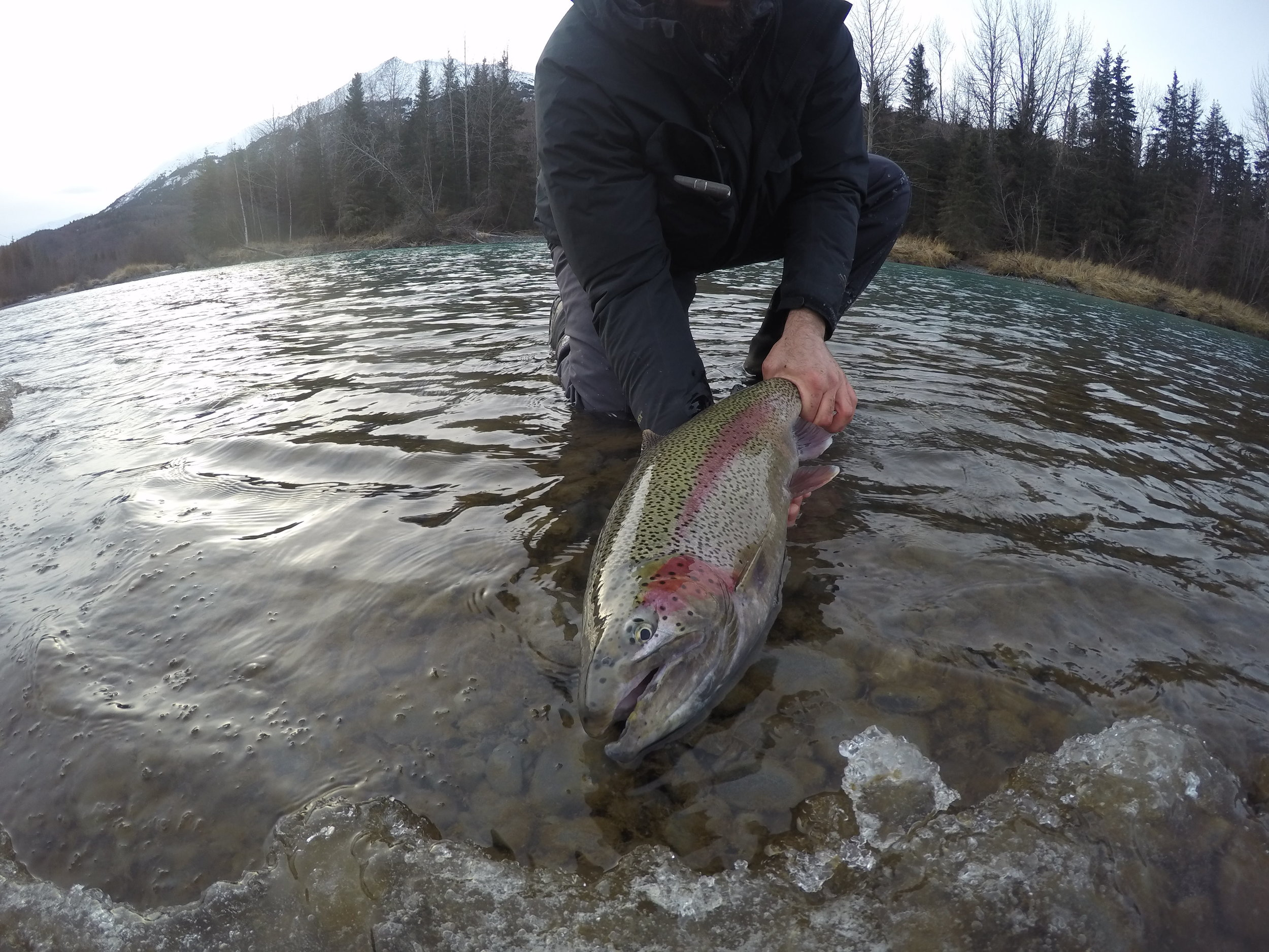 A giant rainbow I caught on an single hand rod with a micro skagit line system by OPST