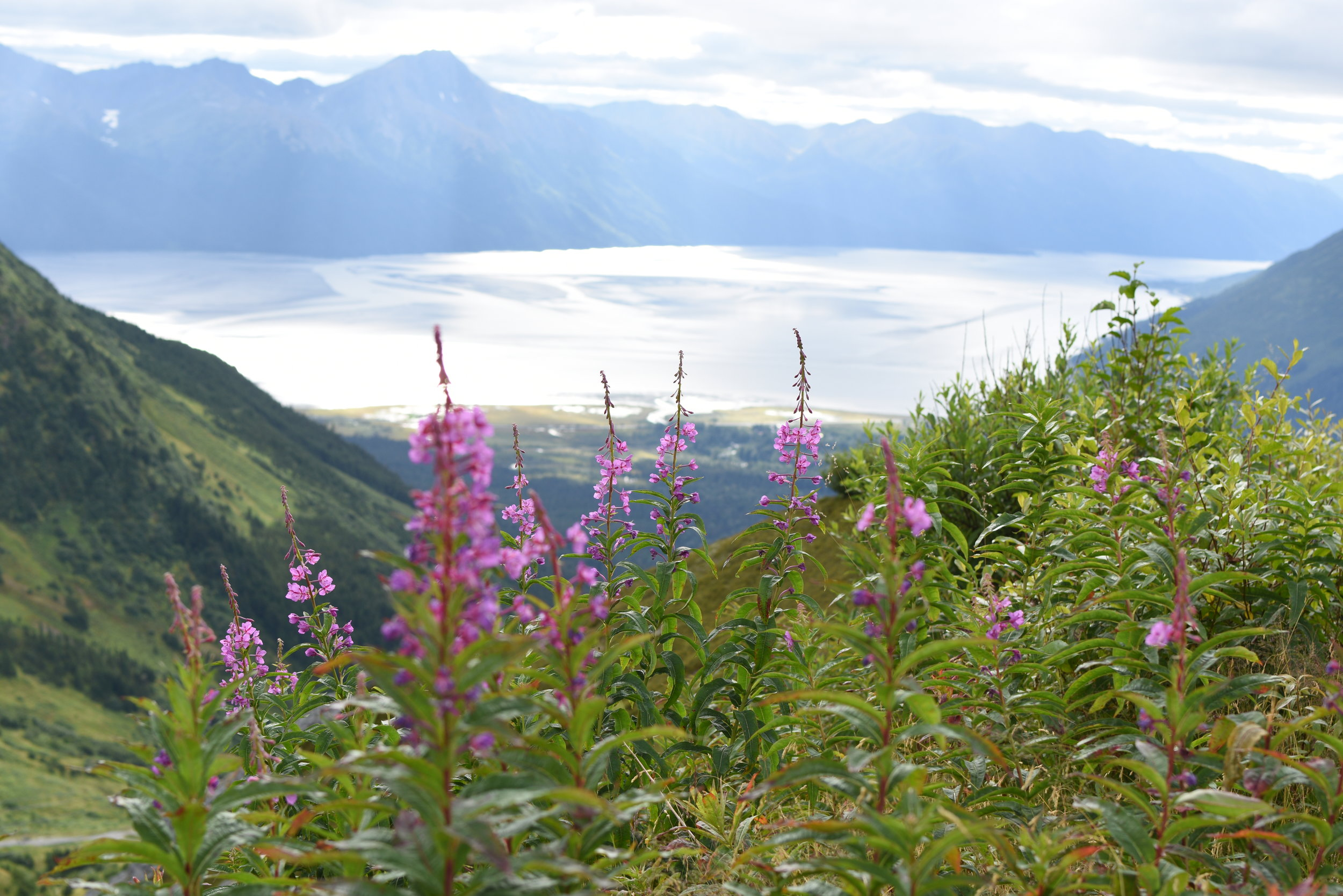 A beautiful summer day on top of Alyeska!