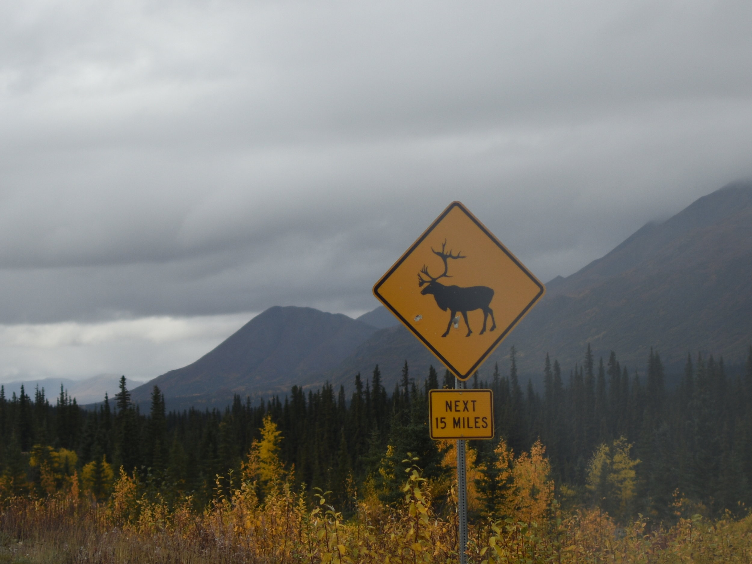 Keep your eyes open for some crossing Caribou!
