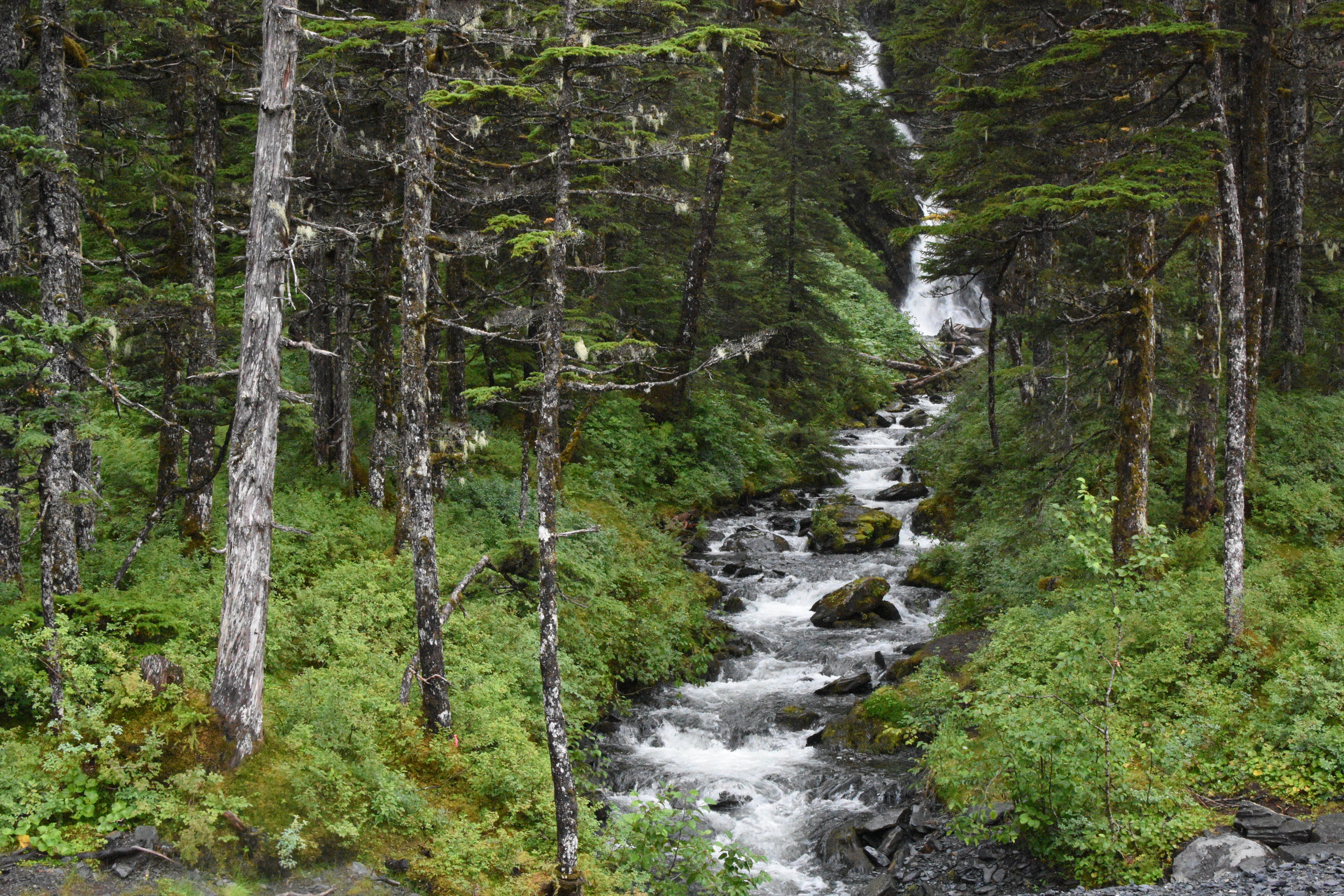 A small mountain stream in Whittier, AK.