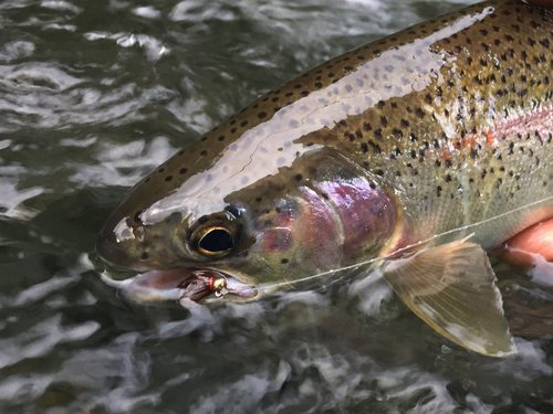 A beauty that took a classic nymph!