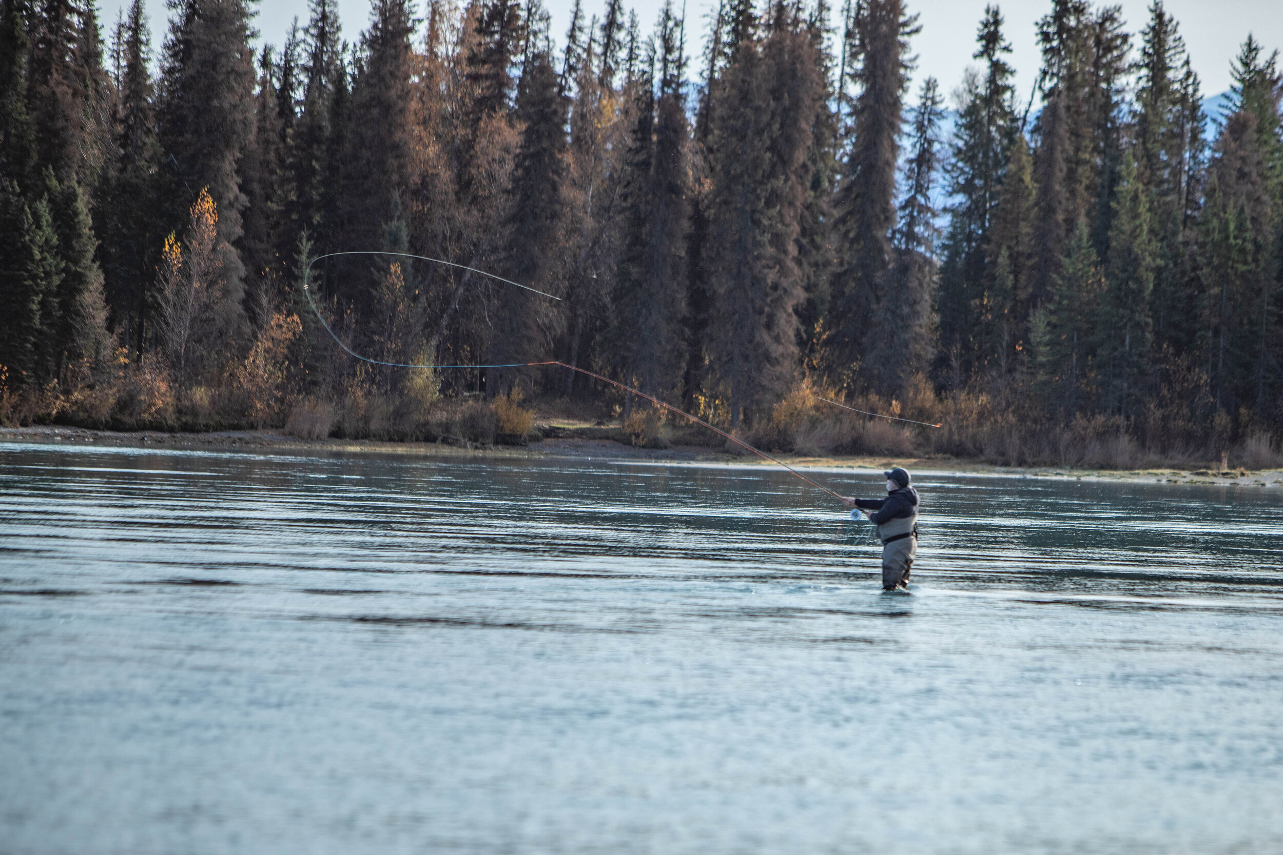 Regan sending a long    Spey cast    as he searches for the elusive giant    Rainbow Trout    of the    Kenai River   !
