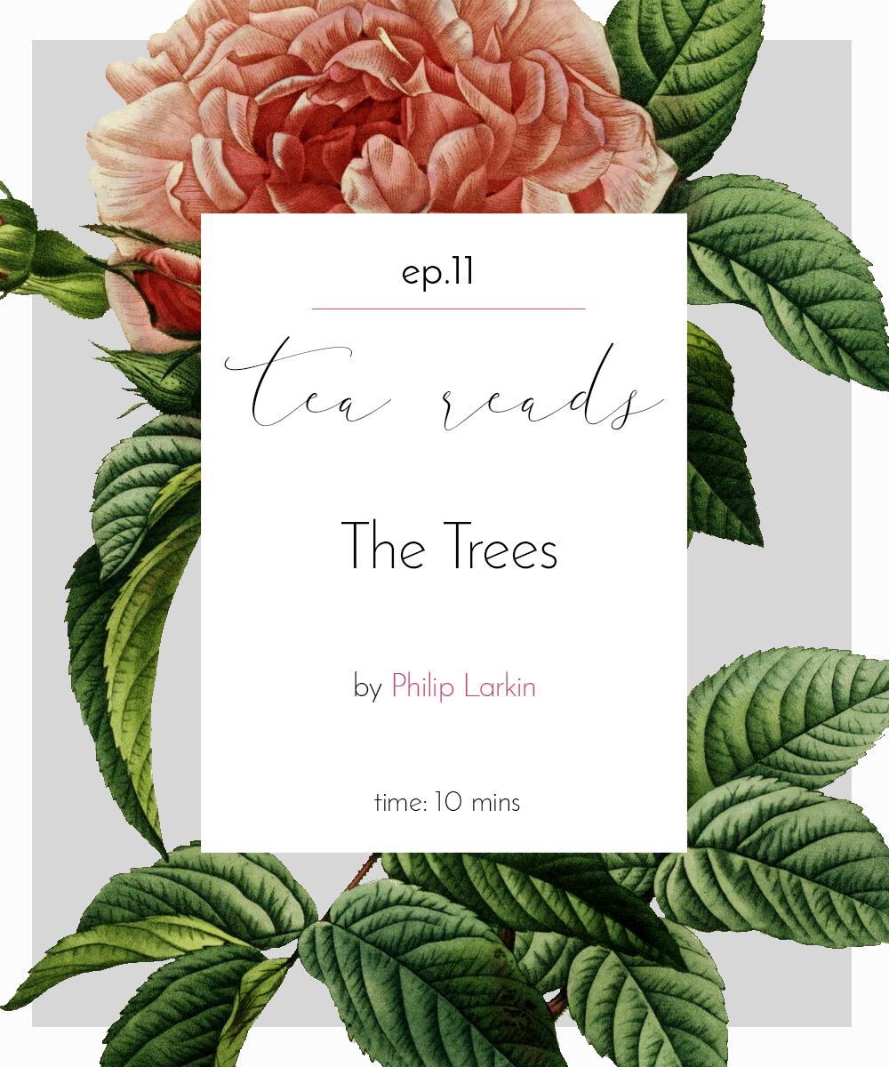 thetrees.jpg
