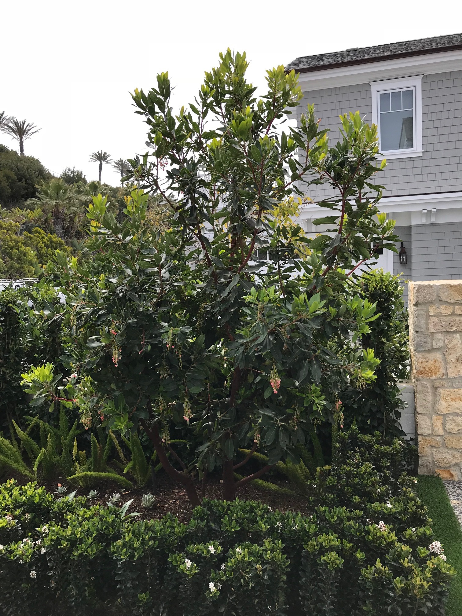 Landscape construction upgraded with green plantings in Dana Point, California, United States