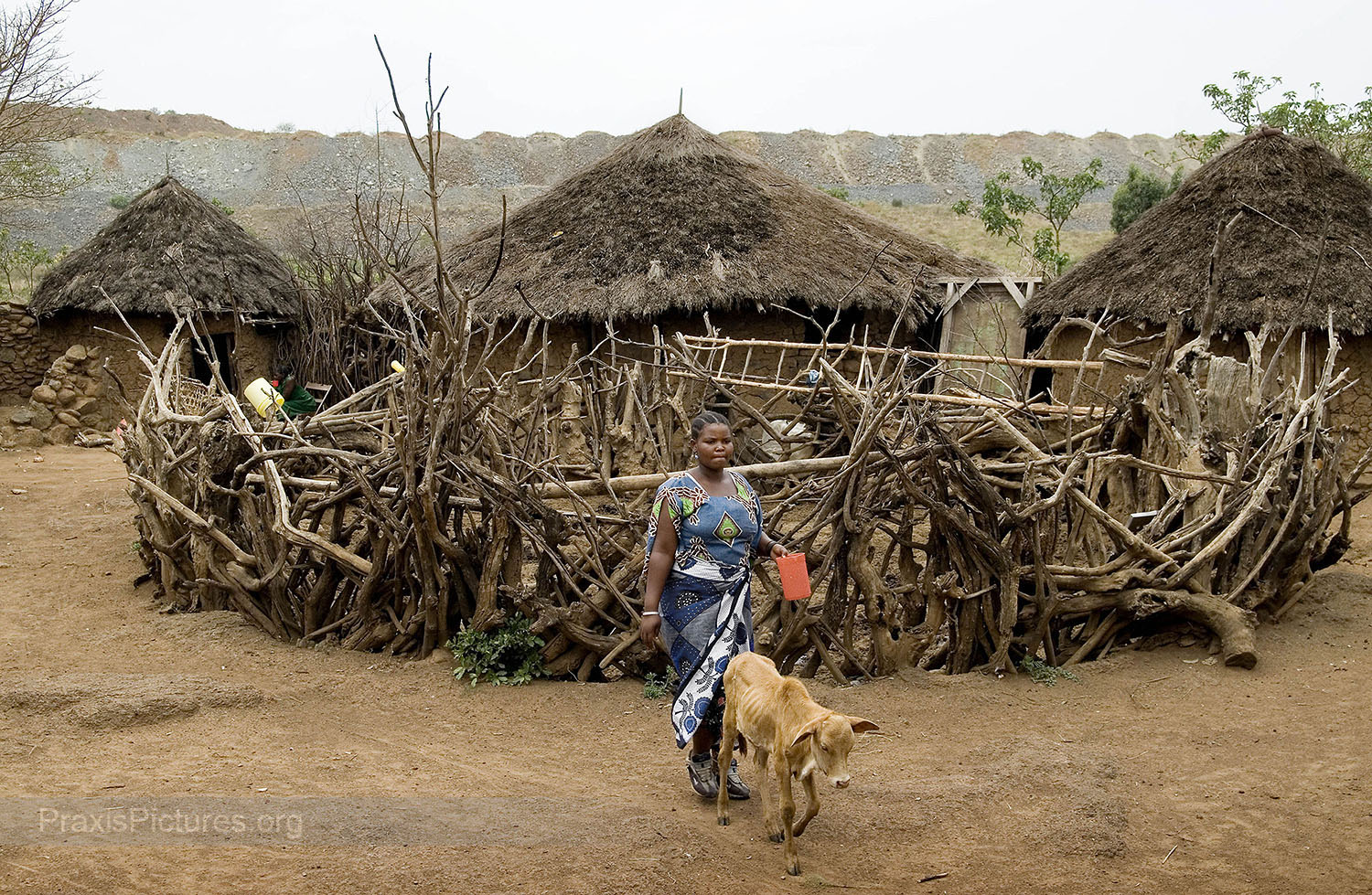 "MWITA - The Mwita family lives in Nyamongo next to Barrick's North Mara gold mine. The waste rock on the edge of the mining pit can be seen just behind their huts here.  Ongoing violent conflict between the mine and local communities have created a climate of fear for those who live nearby. Since the mine opened in 2002, the Mwita family say that they live in a state of constant anxiety because they have been repeatedly harassed and intimidated by the mine's private security forces and by government police. There have been several deadly confrontations in the area and every time there are problems at the mine, the Mwita family say their compound is the first place the police come looking. During police operations the family scatters in fear to hide in the bush,  ""like fugitives,""  for weeks at a time waiting for the situation to calm down.   ""We had never experienced poverty before the mine came here.""  They used to farm and raise livestock,  ""but now there are no pastures because the mine has almost taken the whole land … we have no sources of income and we are living only through God's wishes.""  They say they would like to be relocated, but the application process has been complicated, and they feel the amount of compensation they have been offered is  ""candy."""