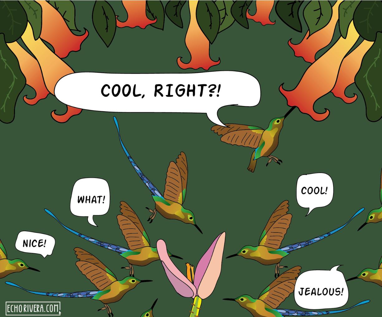 Hummingbird_comic.png