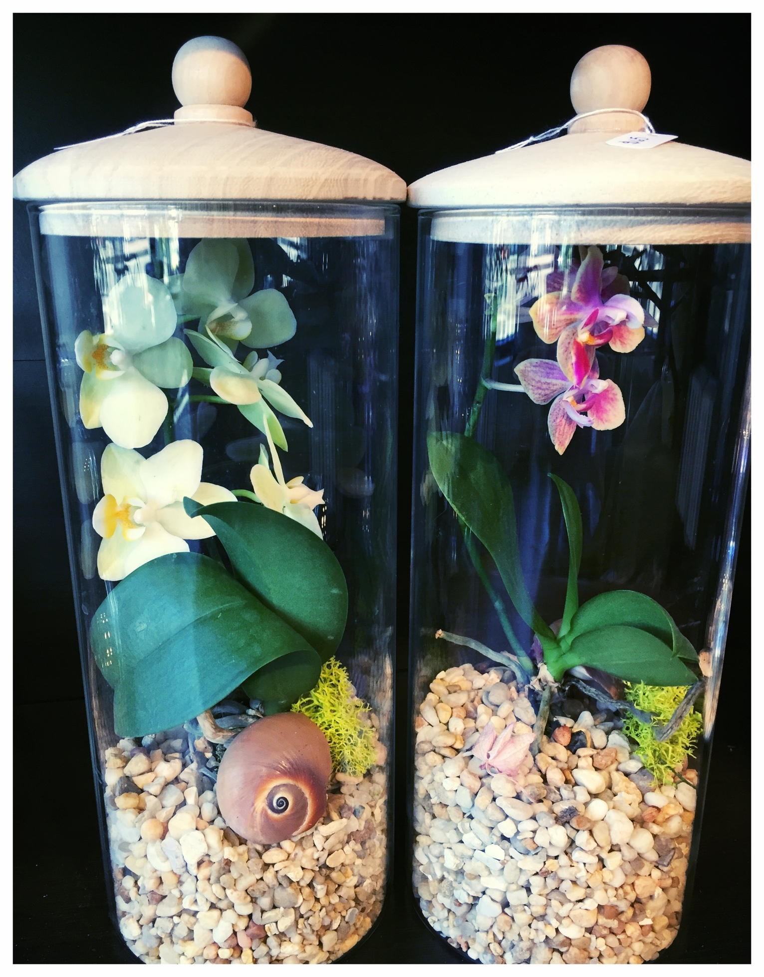 Cylinder Terrariums with Orchids