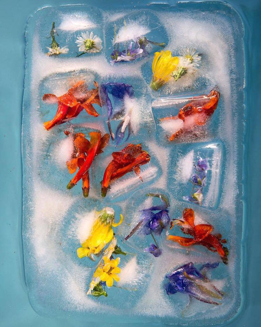 FrozenFlowers3-900x1125.jpg