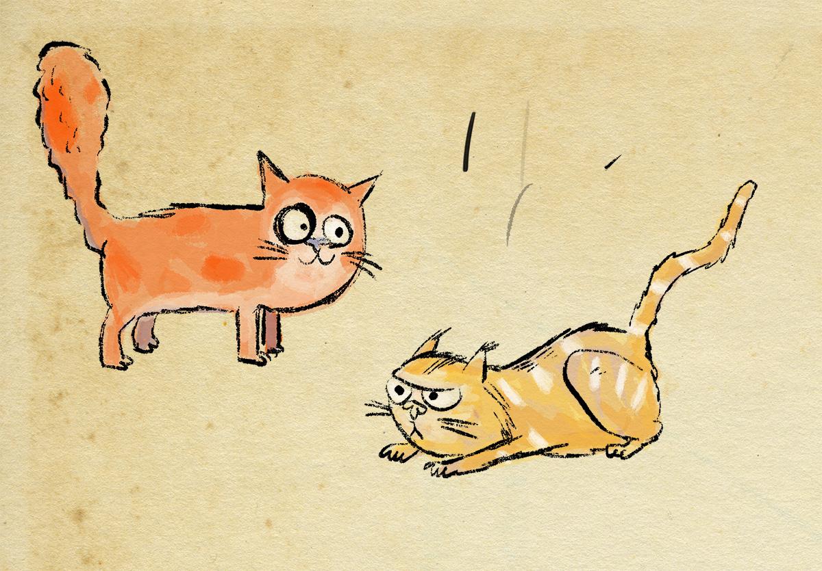 morecats.jpg