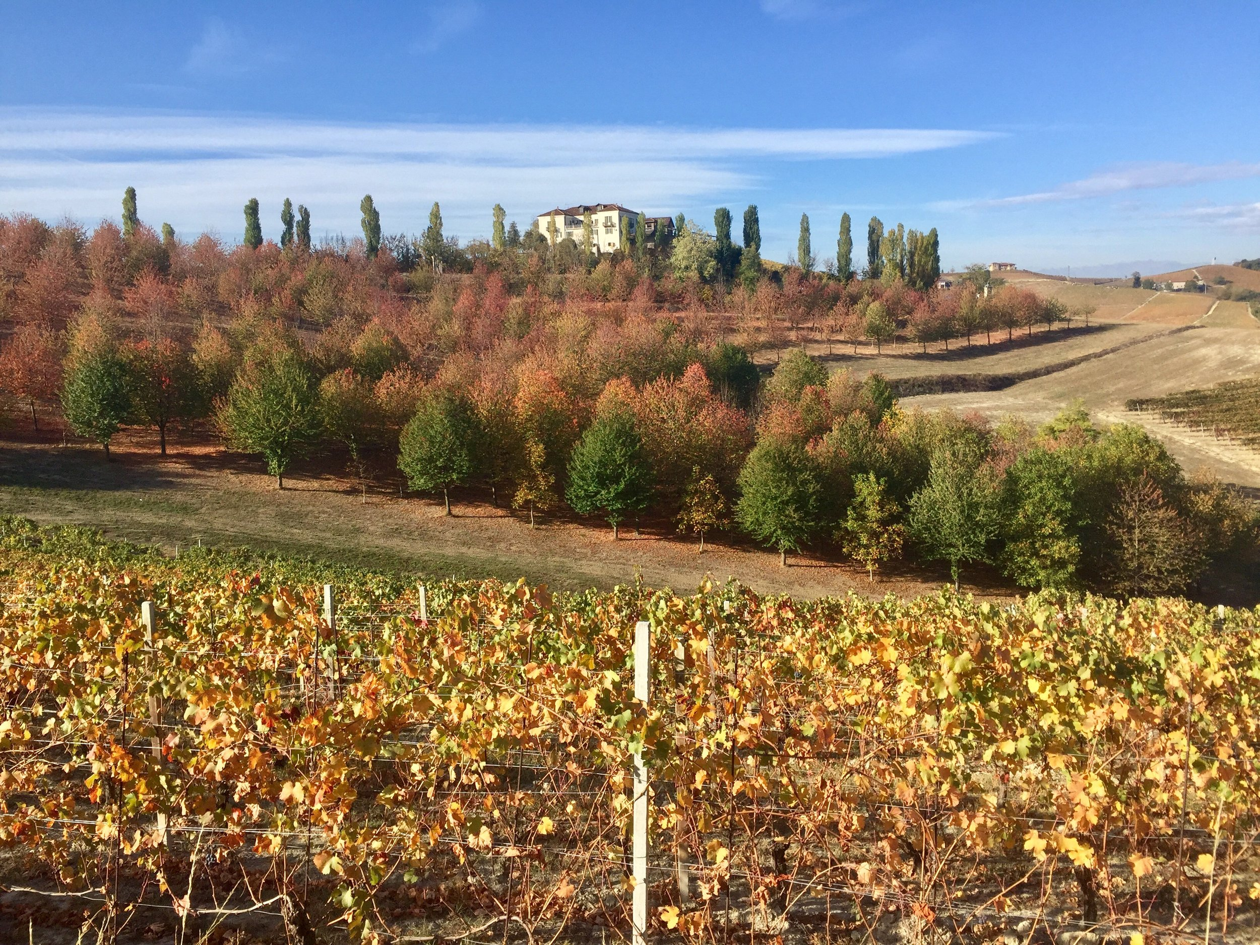 A perfect day for a walk through the vineyards around Dogliani