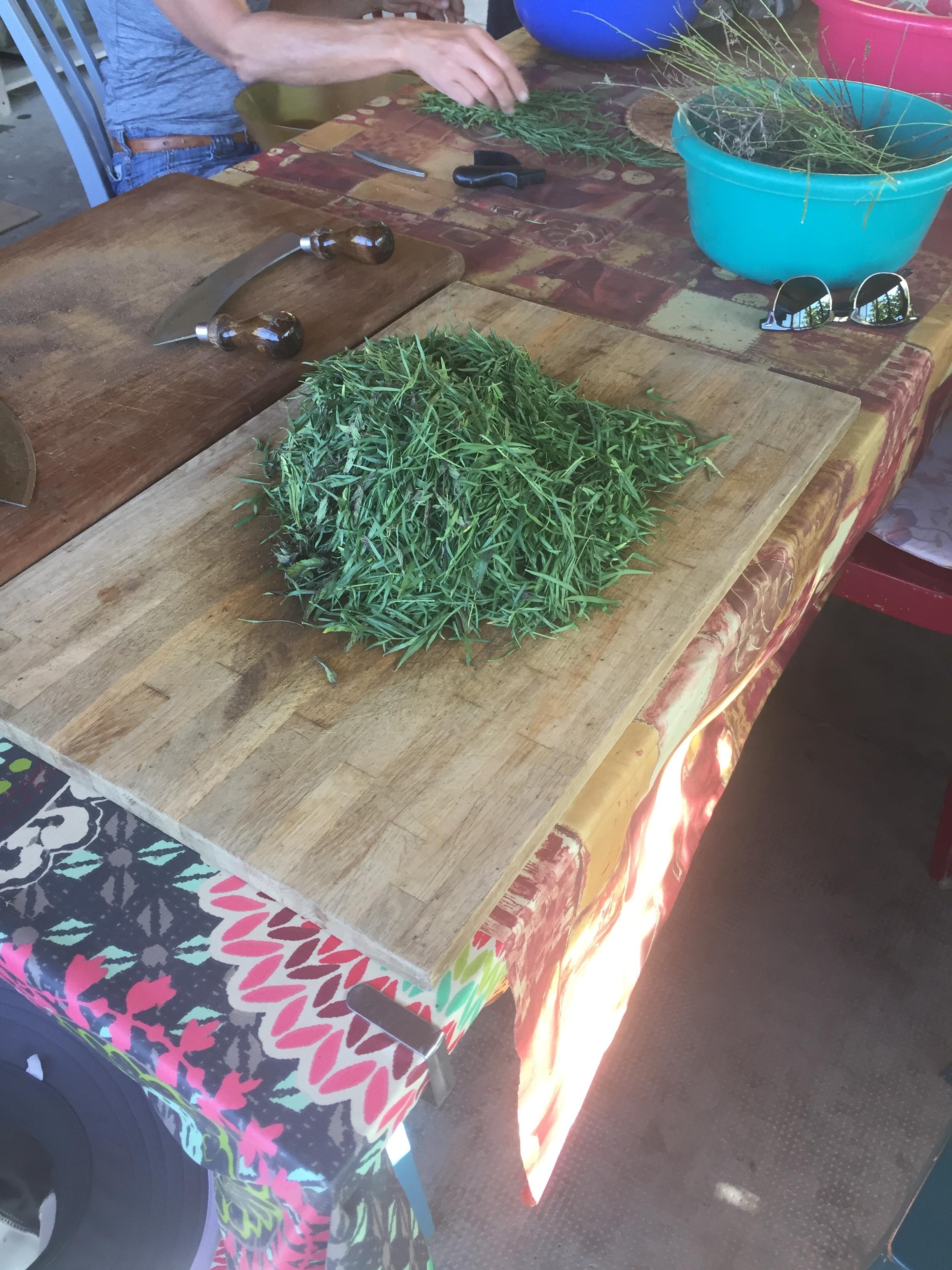 herbs2.JPG
