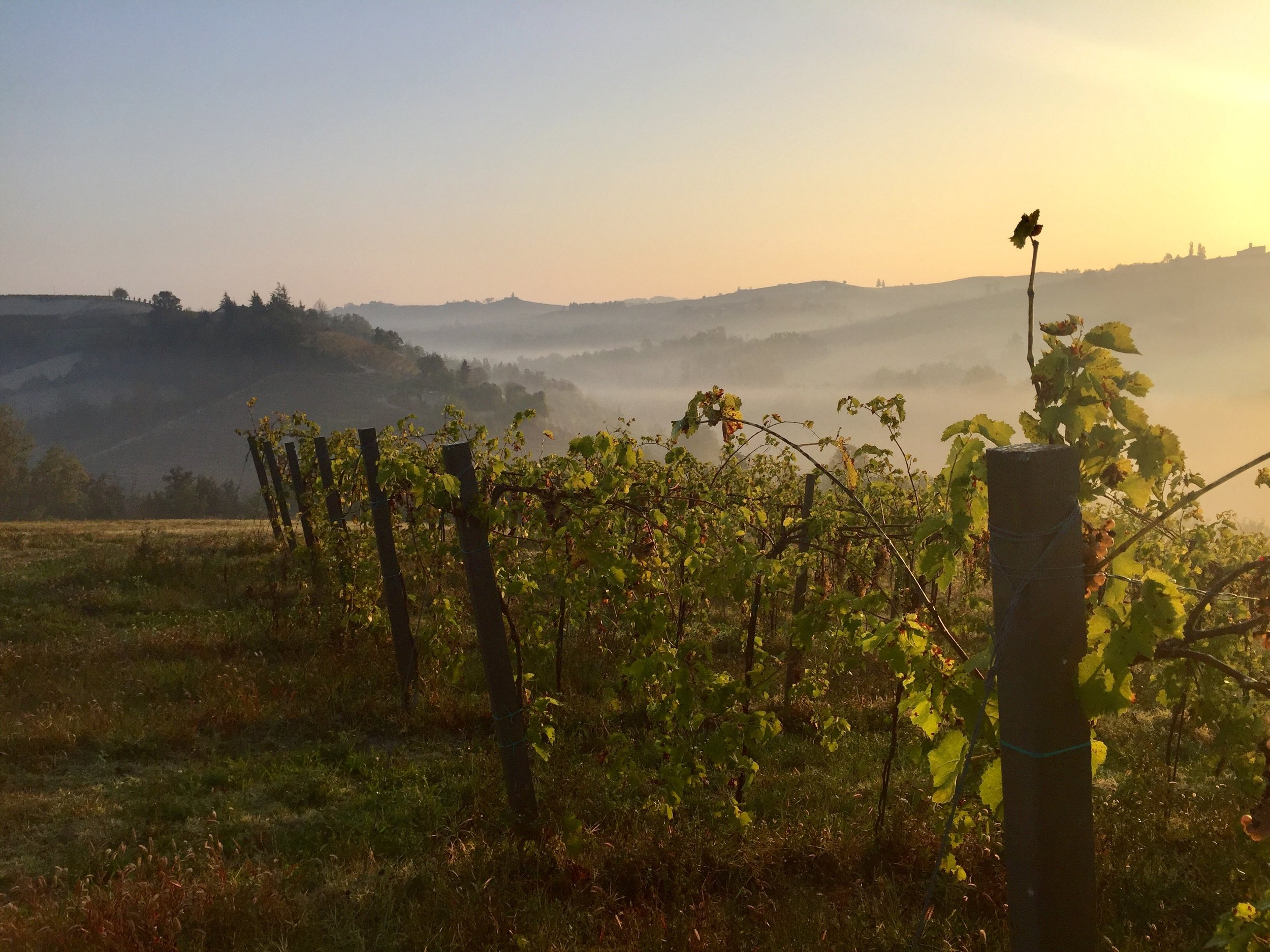 Morning nebbia in the valleys of the langhe