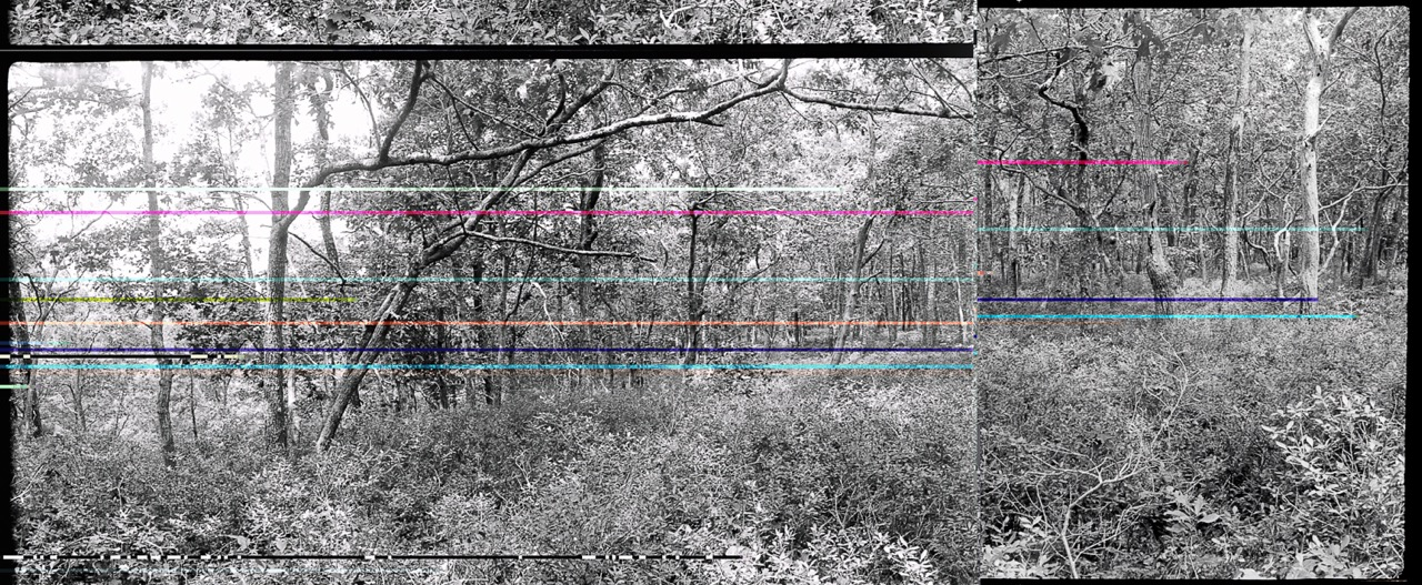 07.wellfleet woods1.21-22 colorflipbroken.jpeg