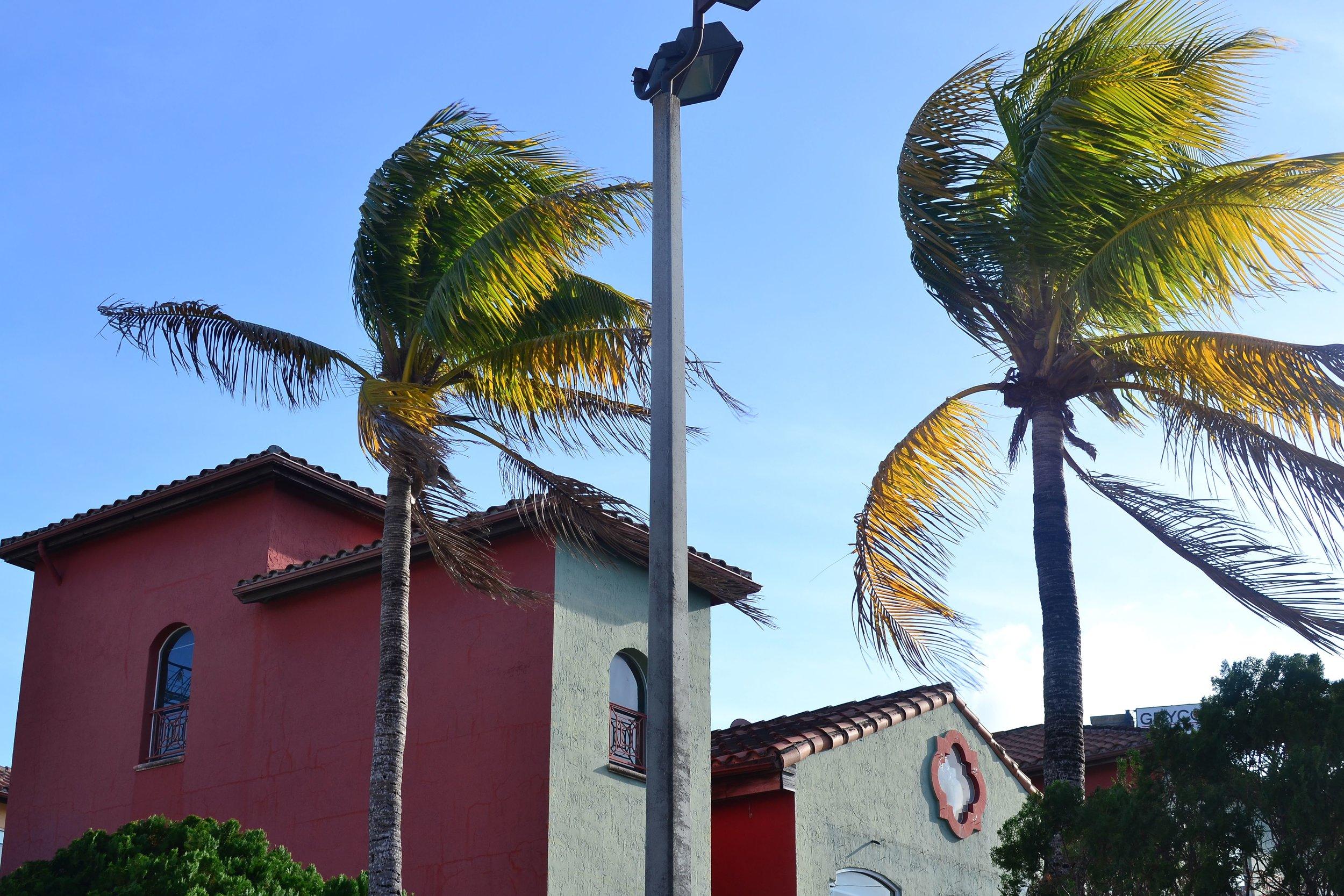 Coconut Grove in Miami