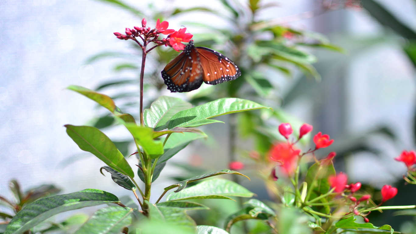 butterfly in garden.jpg