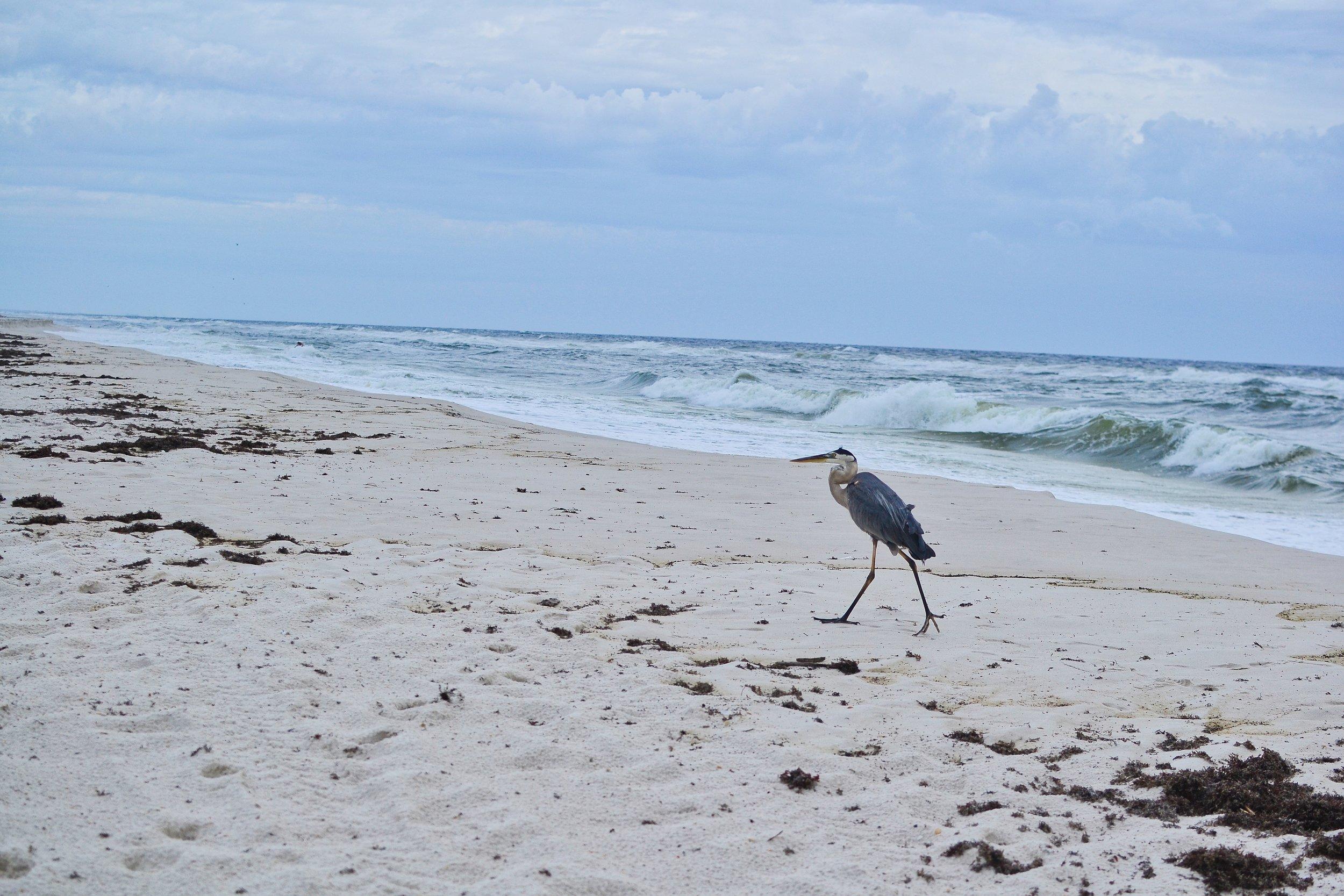Gulf Islands National Seashore bird.jpeg