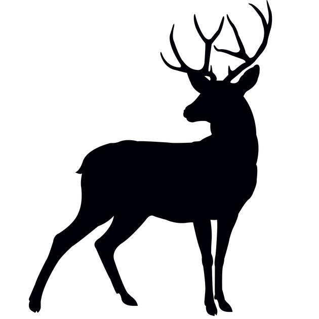 Mule Deer Rut Hunts