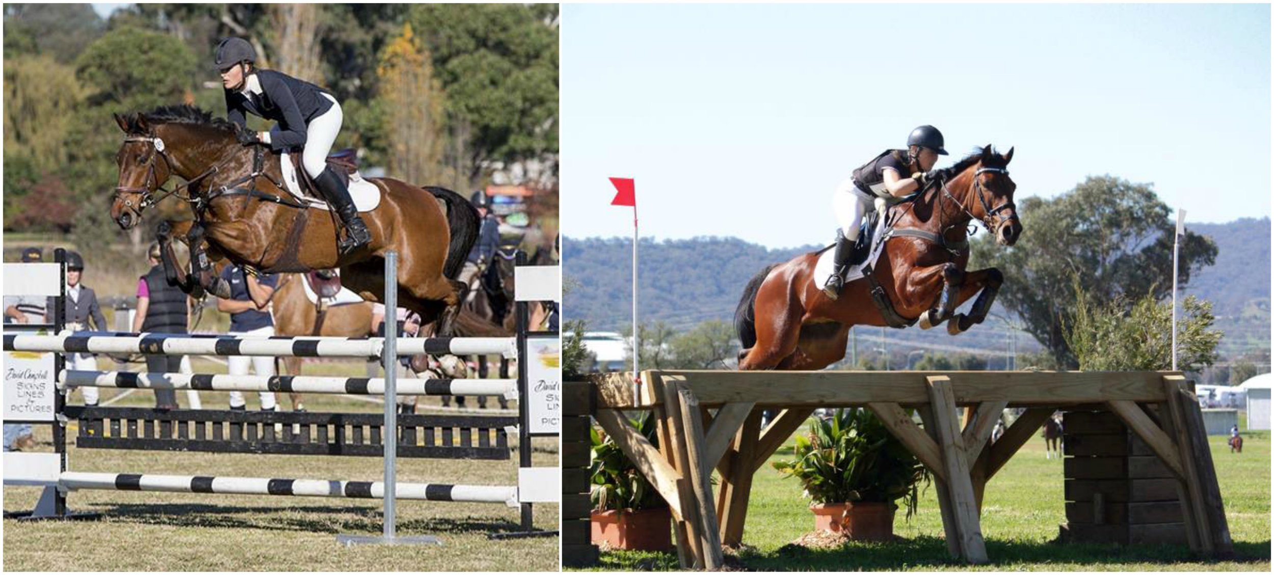 """SOLD """"Belmont Backstage"""" on left Camden CIC2** 2014 and right with new rider Jessica Grossman Tamworth CIC3*** 2016"""
