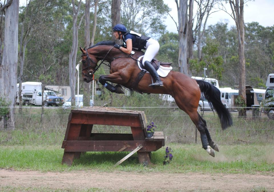 """LEASED """"Aerodynamic"""", pictured with Bella Mowbray Sydney Eventing CIC 1*, now leased by Emma Heath."""