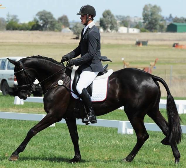 "SOLD ""Equus Brooklyn""on behalf of George Sheridan & Hannah Walls of Sheridan Equestrian."