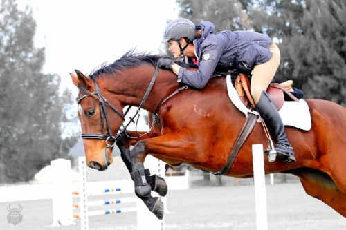 """SOLD """"Galactic"""" pictured with Hayley Frielick. """"Joey"""" successfully competed CIC1* 2016, and is now a straight showjumper."""