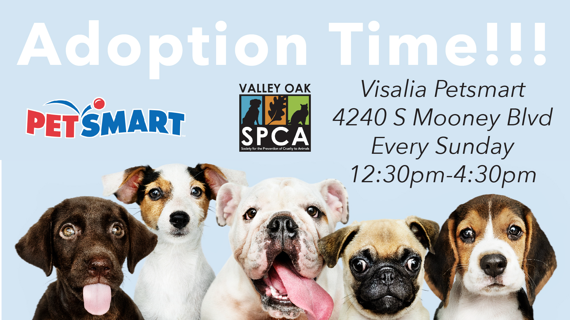 Visalia Petsmart Adoption.jpg