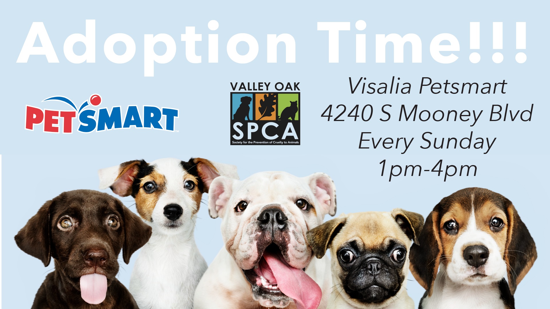Visalia Petsmart Adoption.png