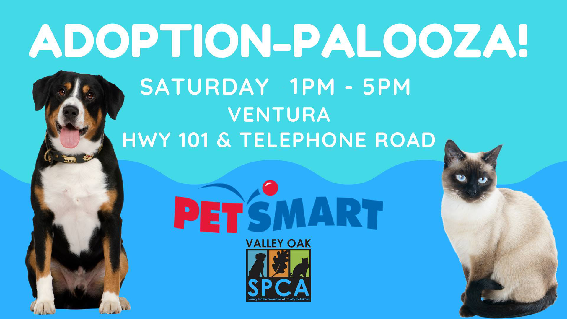 Ventura Adoption.jpg
