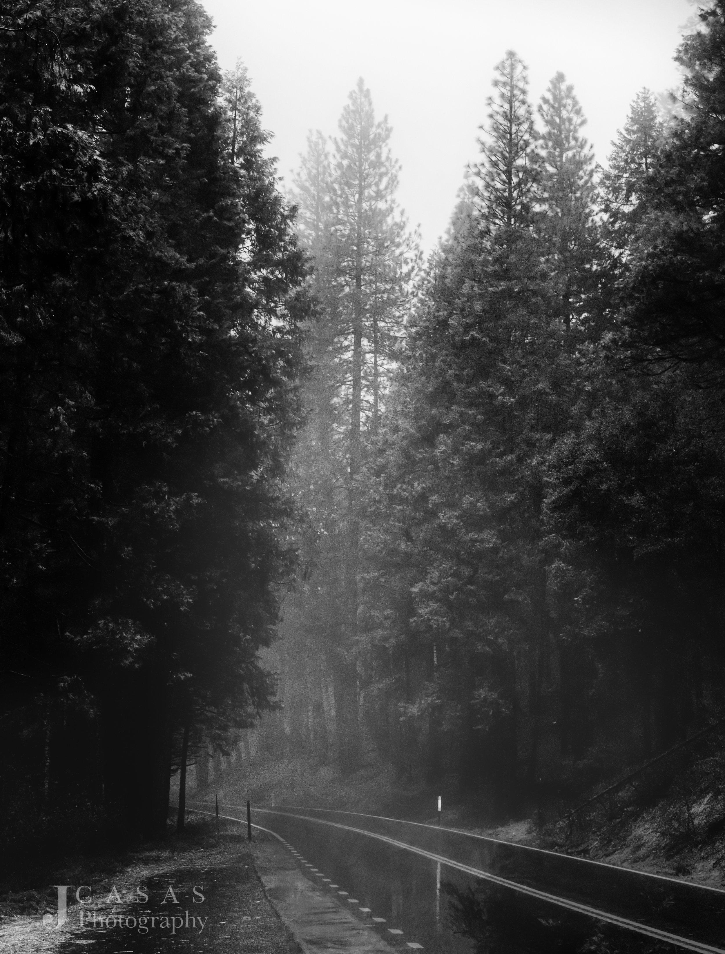 Foggy Rainy Yosemite Road