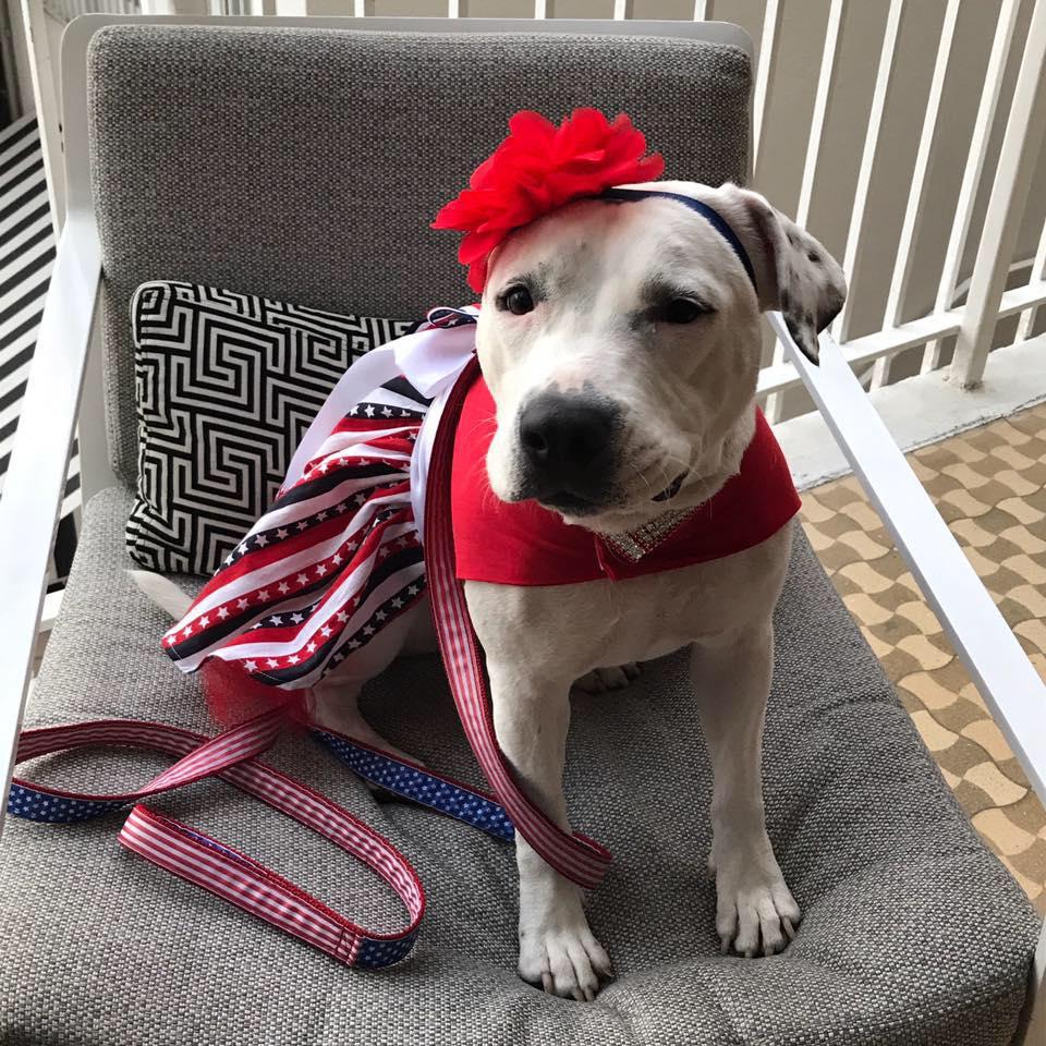 Meet Abigail - Hero Dog 2017