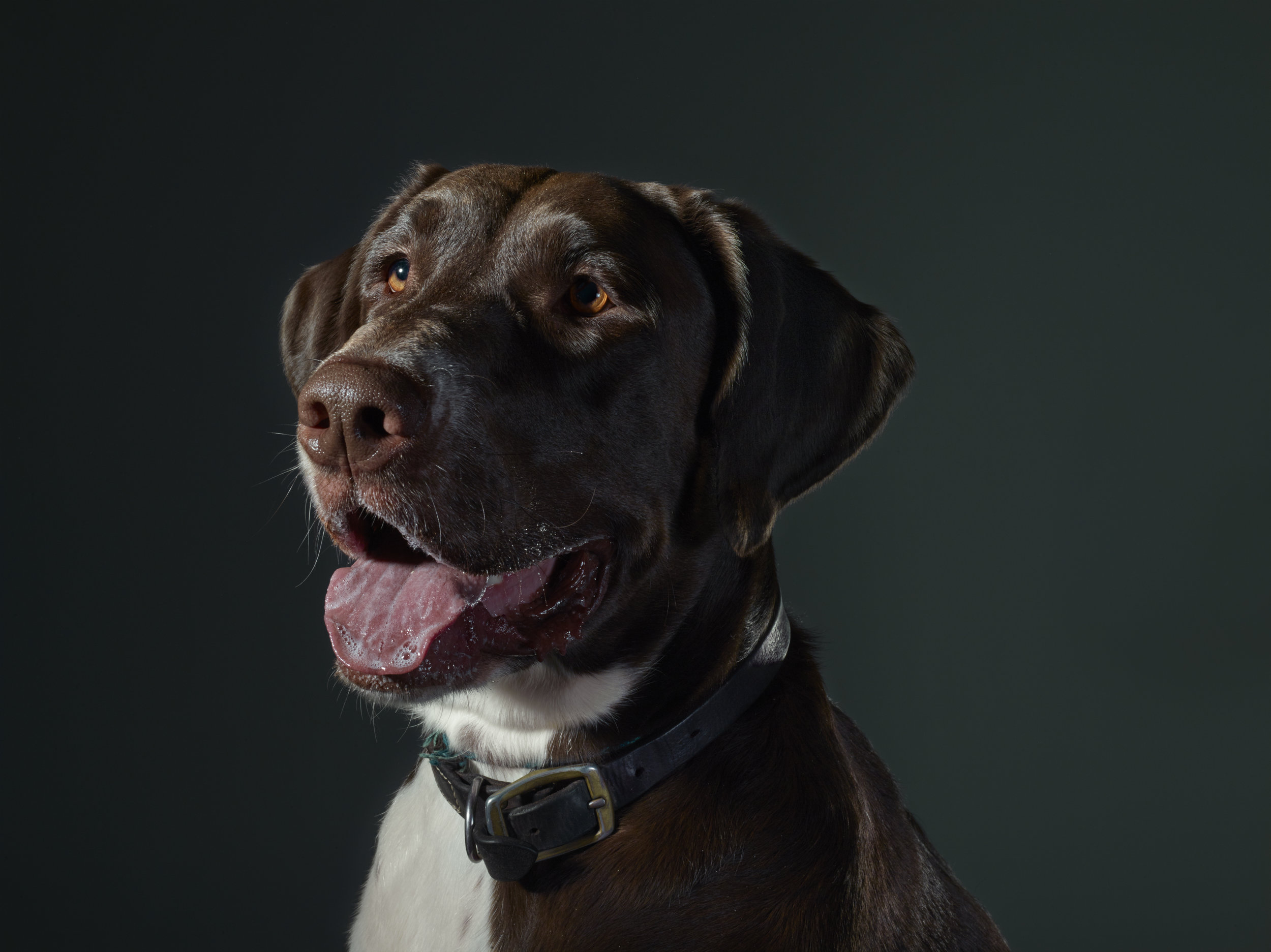 Portrait of Tug