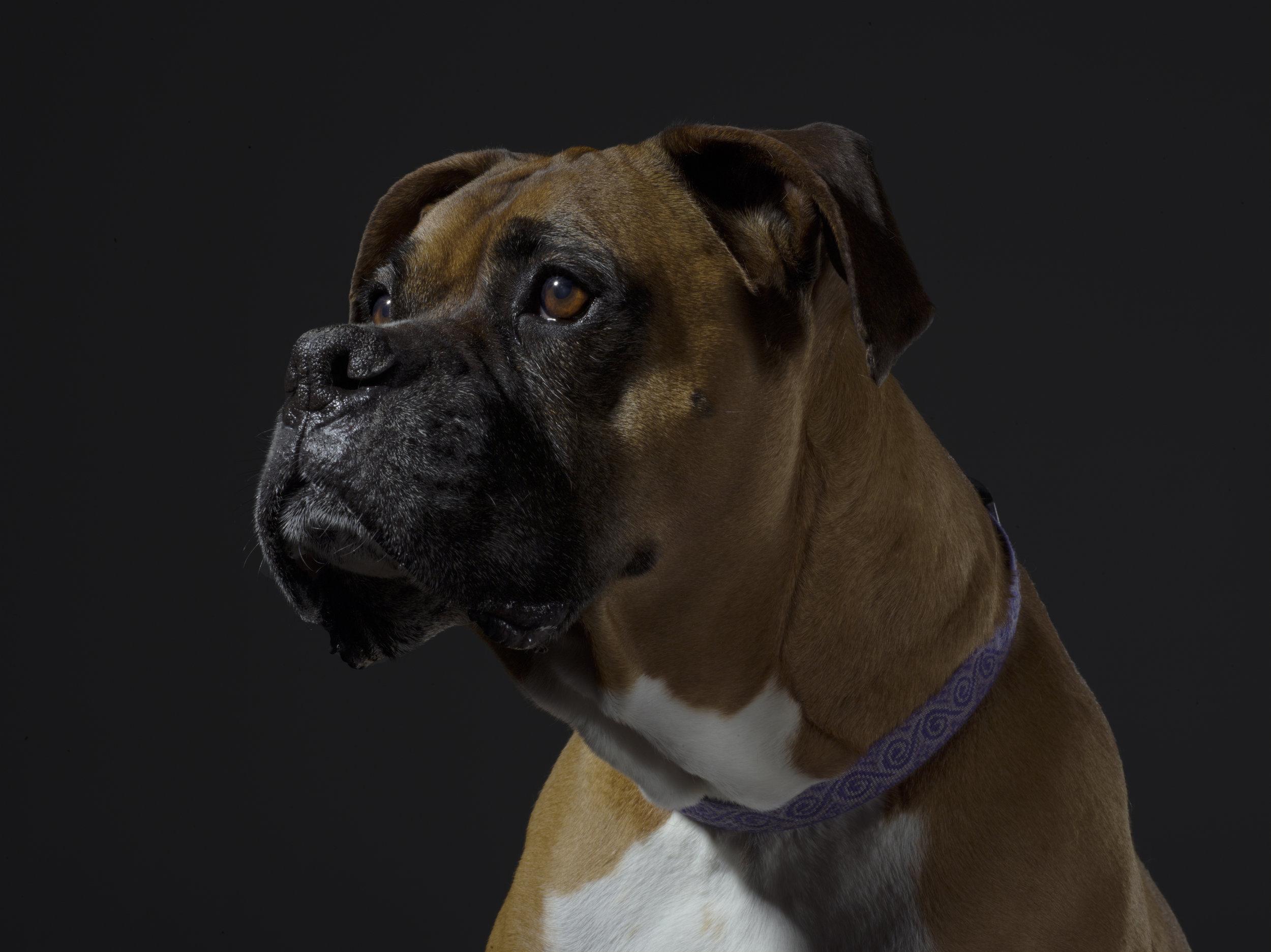 Portrait of Tyson