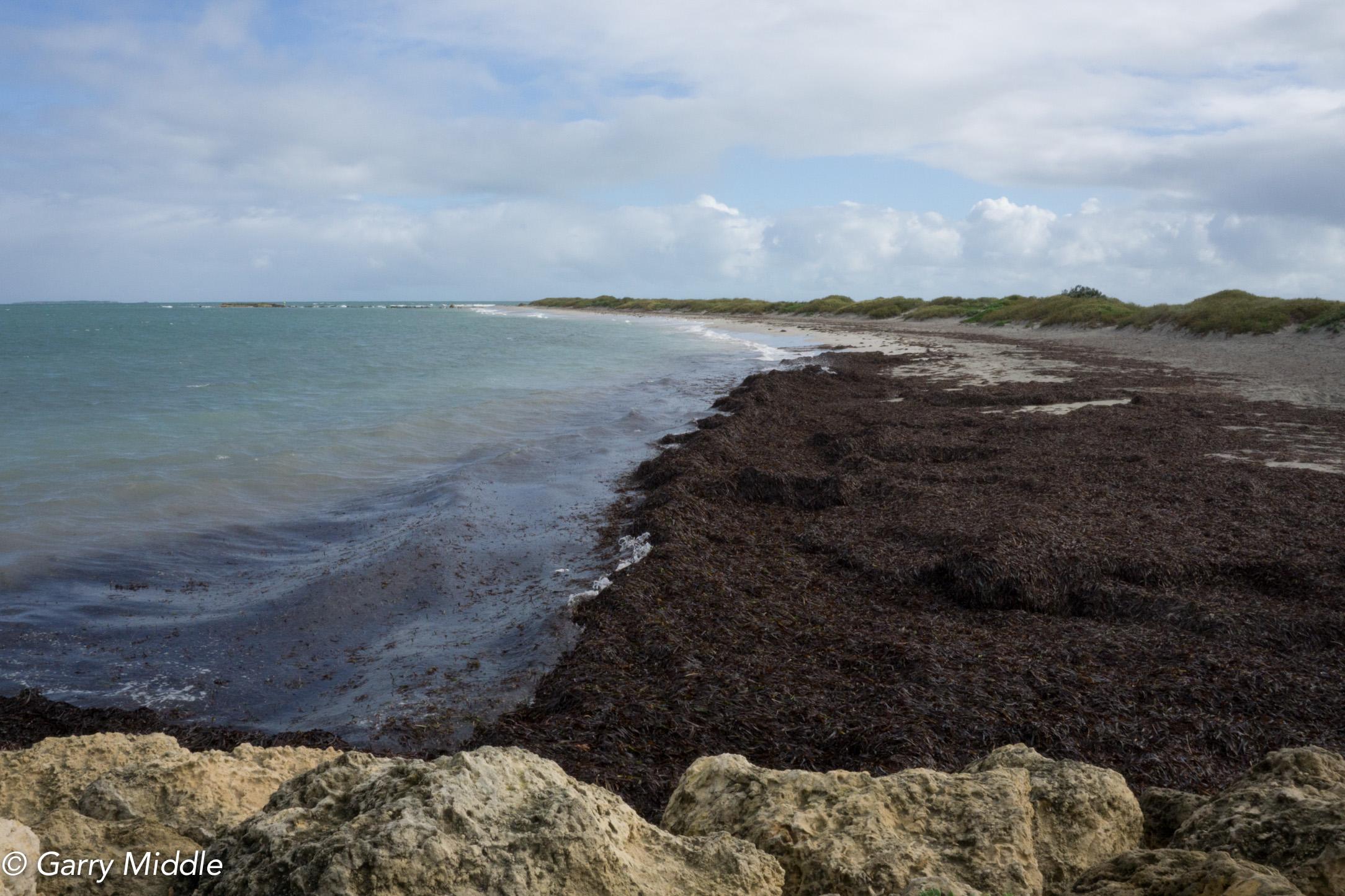 Plate 9: Beach walk to Woodman Point.