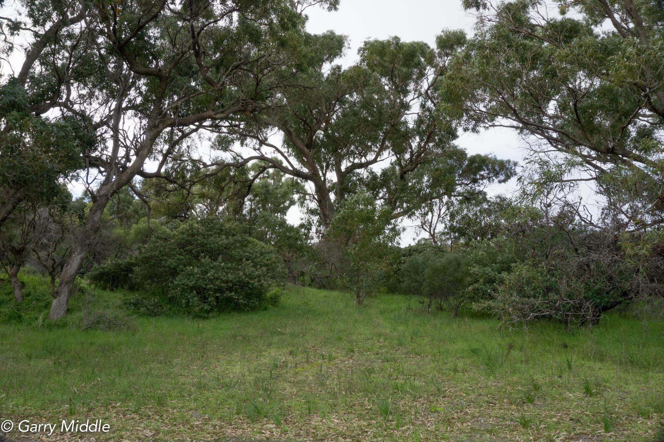 Plate 21: Tuart woodland