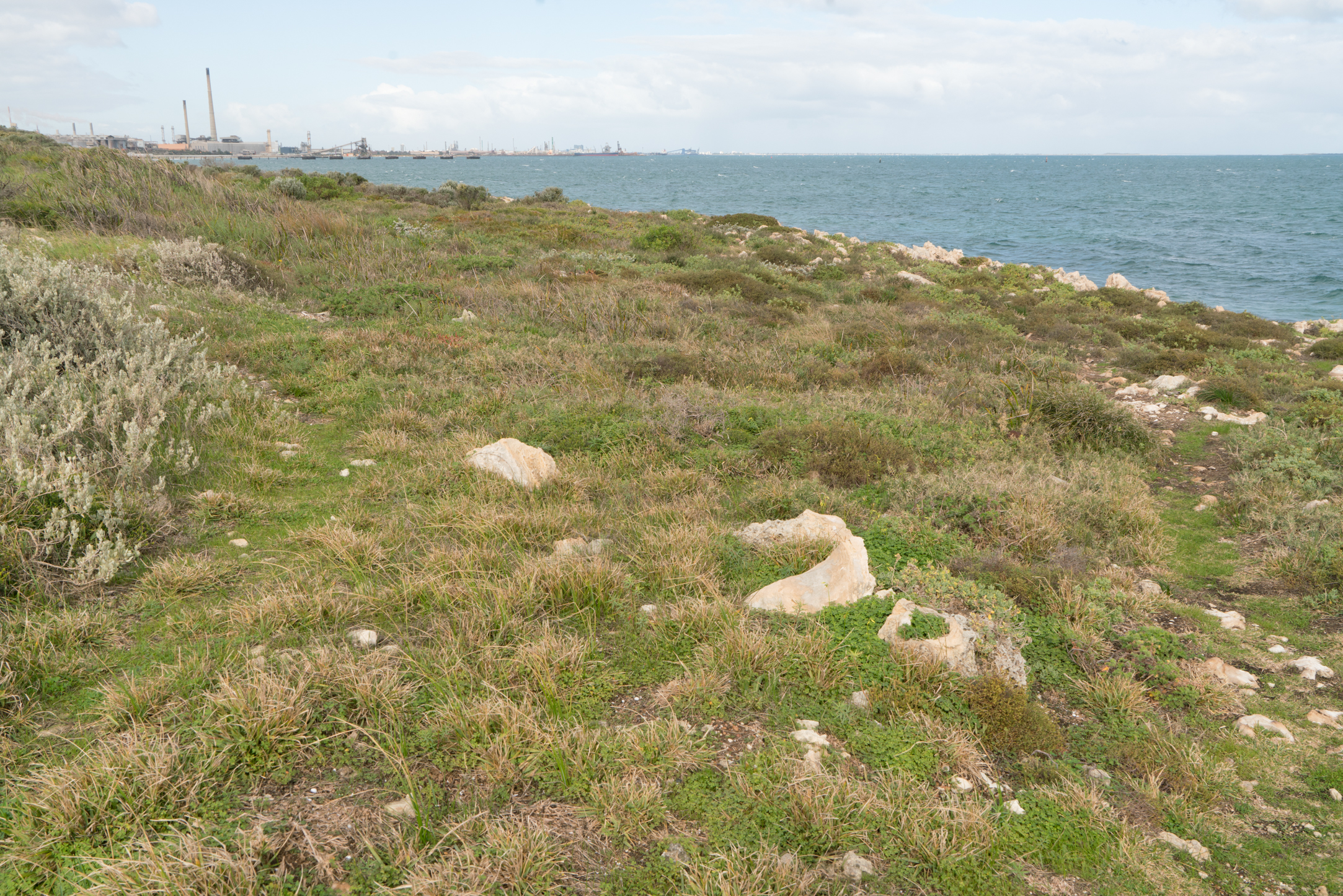 Plate 16: The informal cliff top track on the right of the photo and the less obvious track around the bush back to the inland track on the left of the photo.
